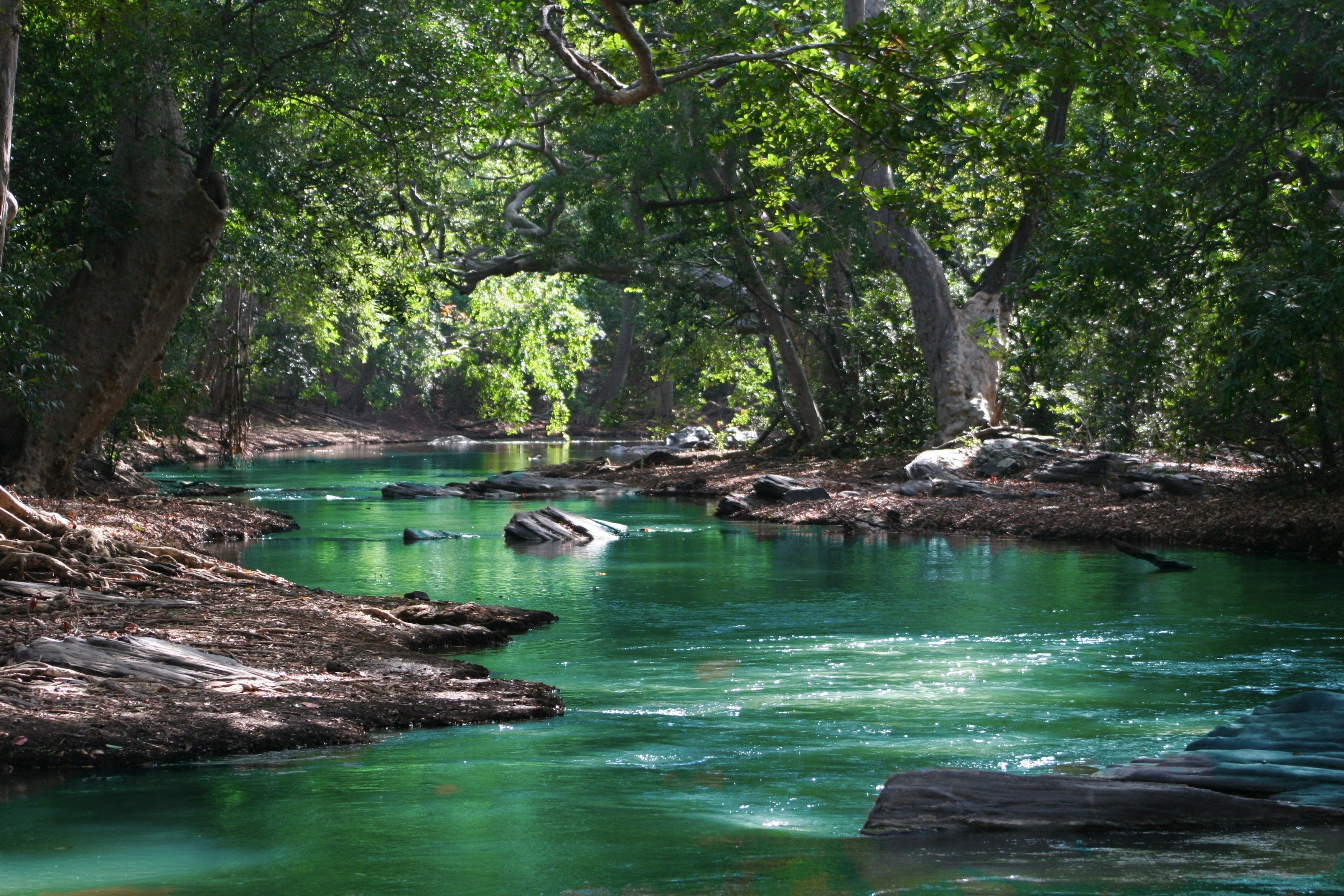 Body of water between green leaf trees photo