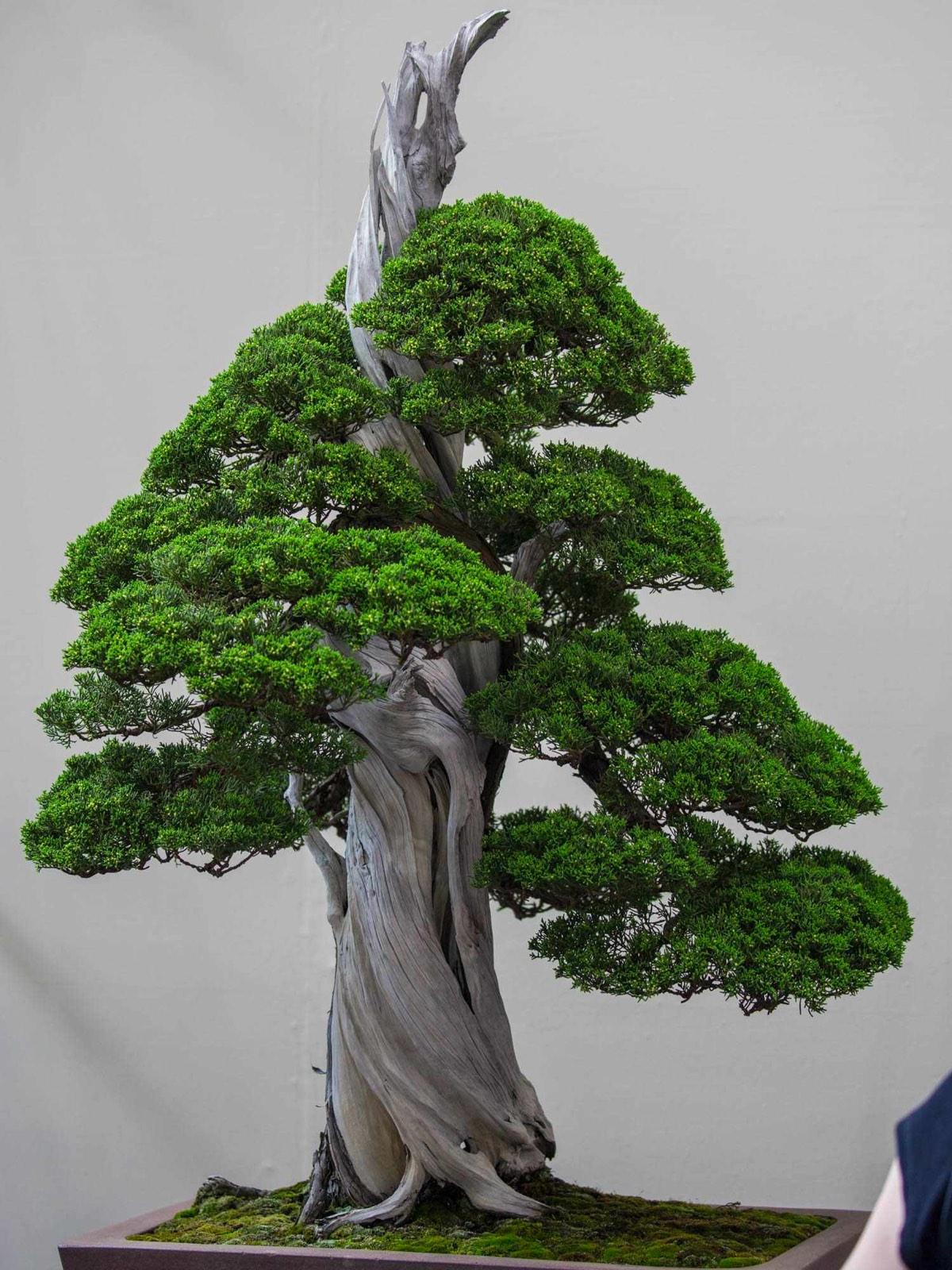 Bonsai display photo
