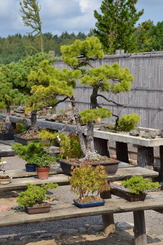Bonsai garden photo