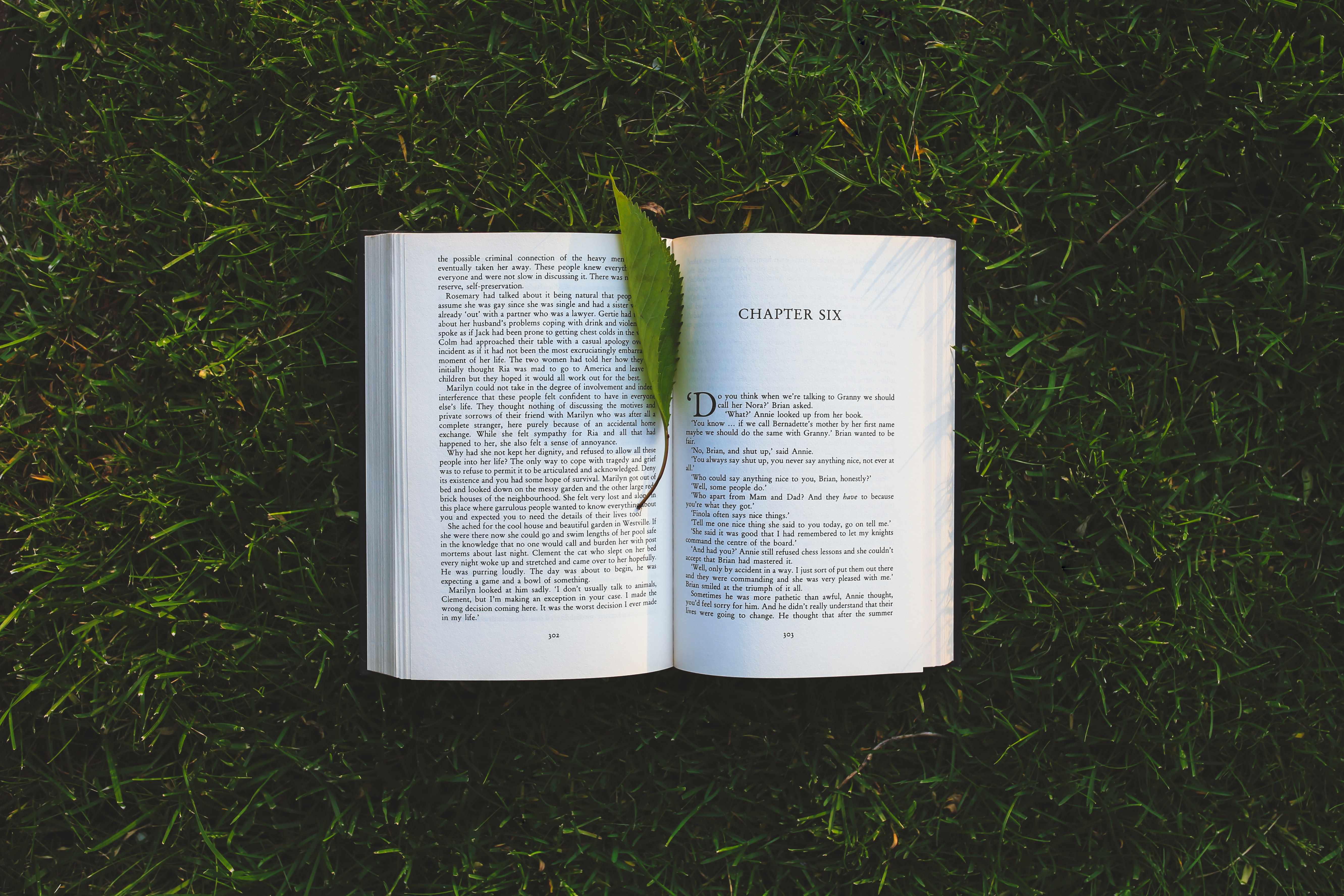 Book: chapter six, Book, Letters, Tree, Summer, HQ Photo