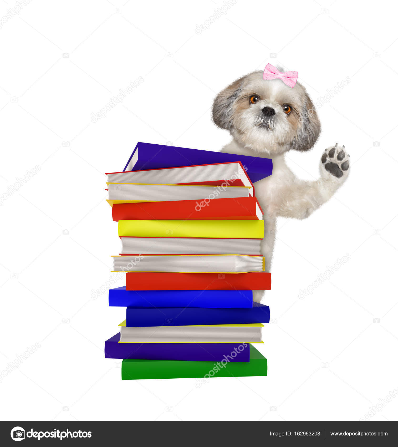 Intelligent dog with books isolated on white — Stock Photo ...