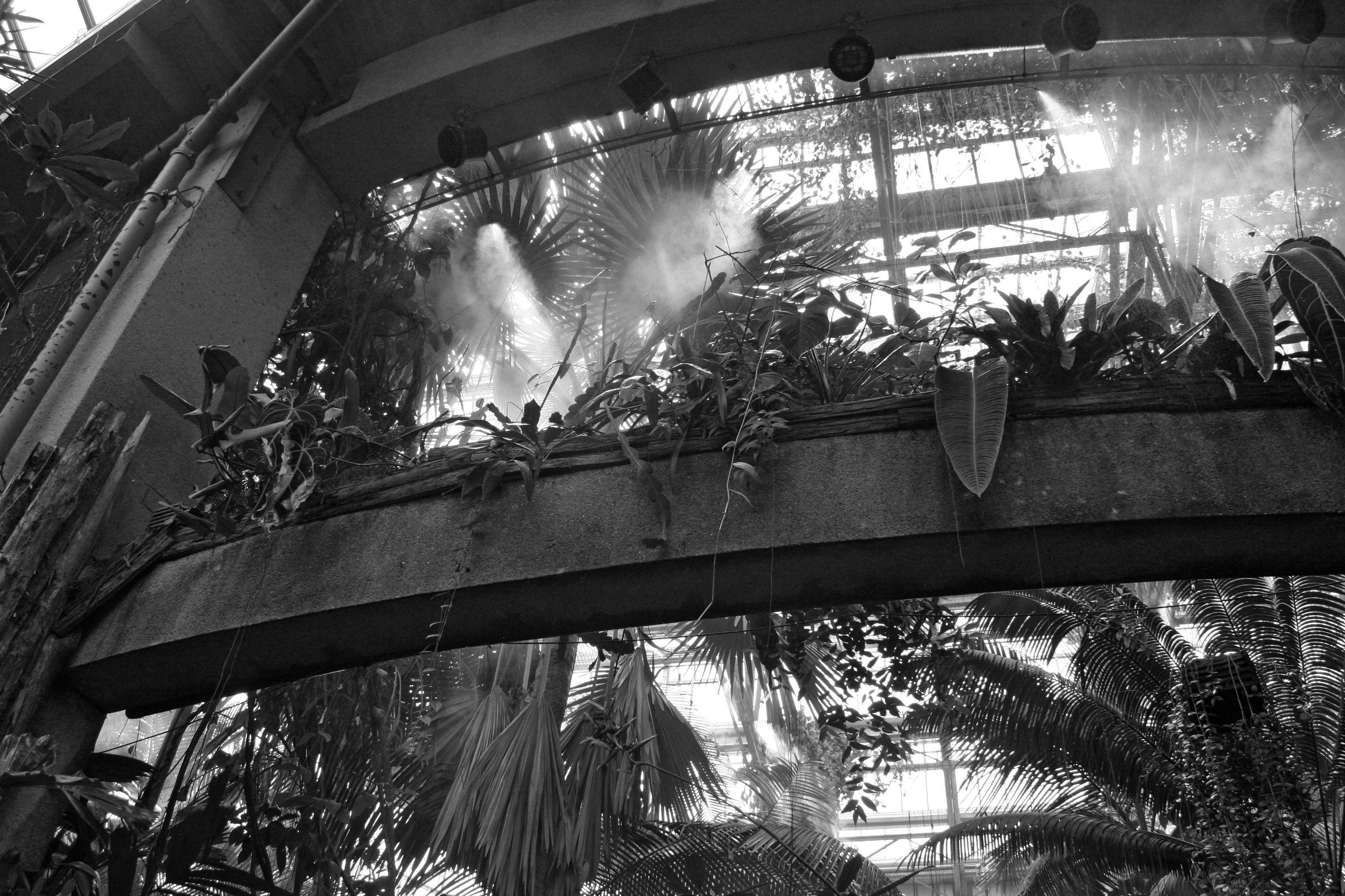 Botanical garden steam photo
