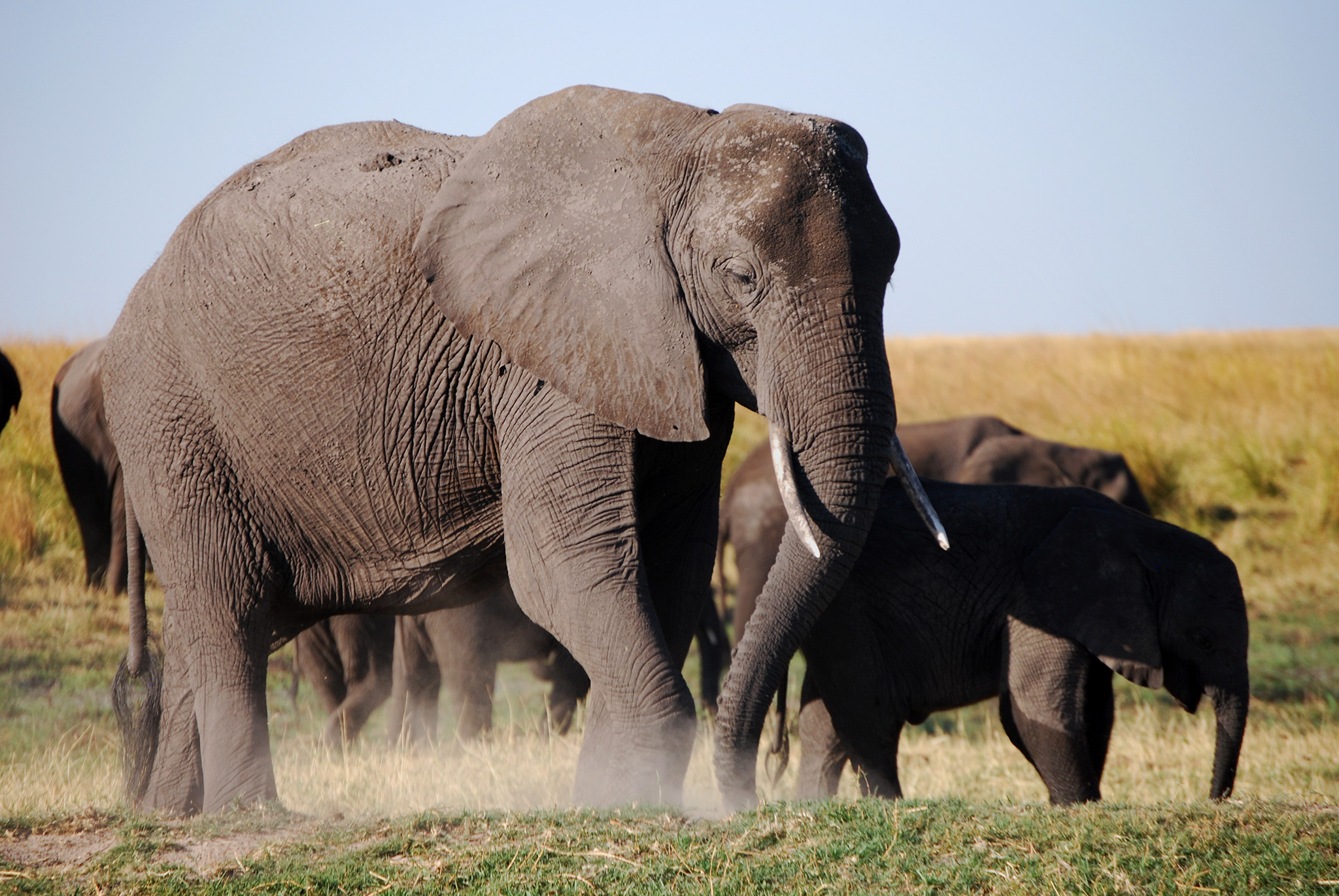 Elephant Refugees Flee to Last Stronghold in Africa