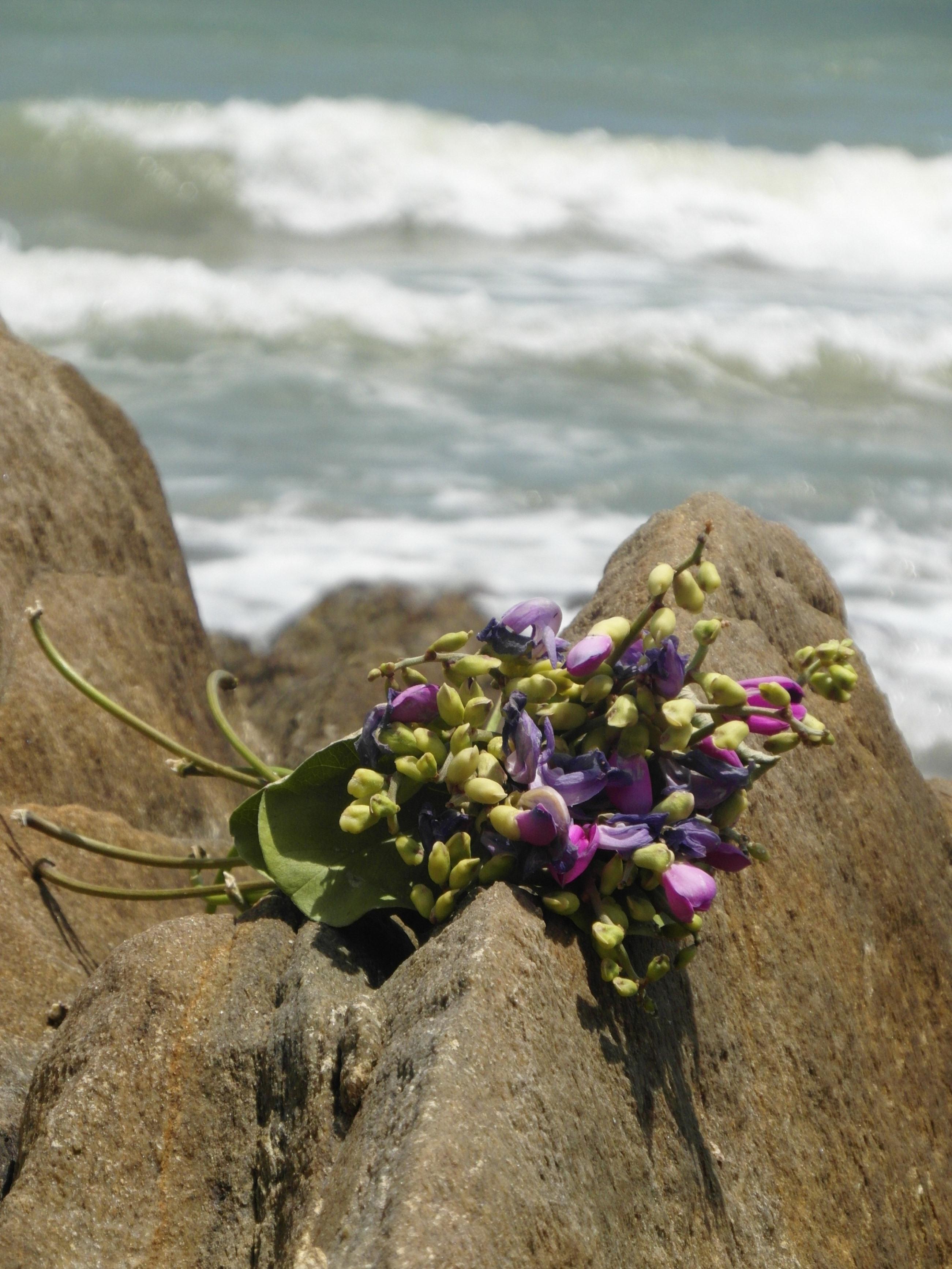 Bouquet on ocean rocks photo