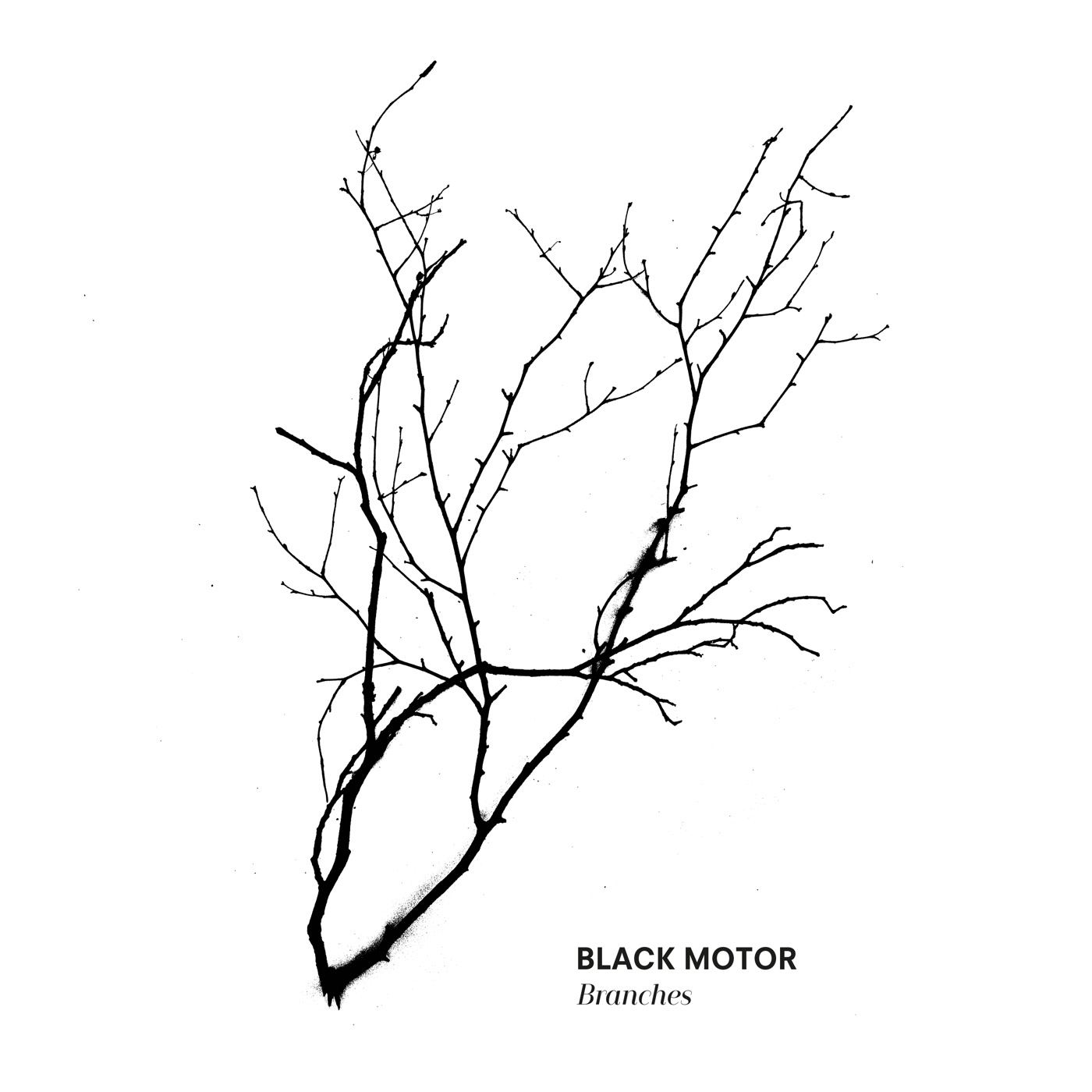 Branches - Black Motor | Kudos Records