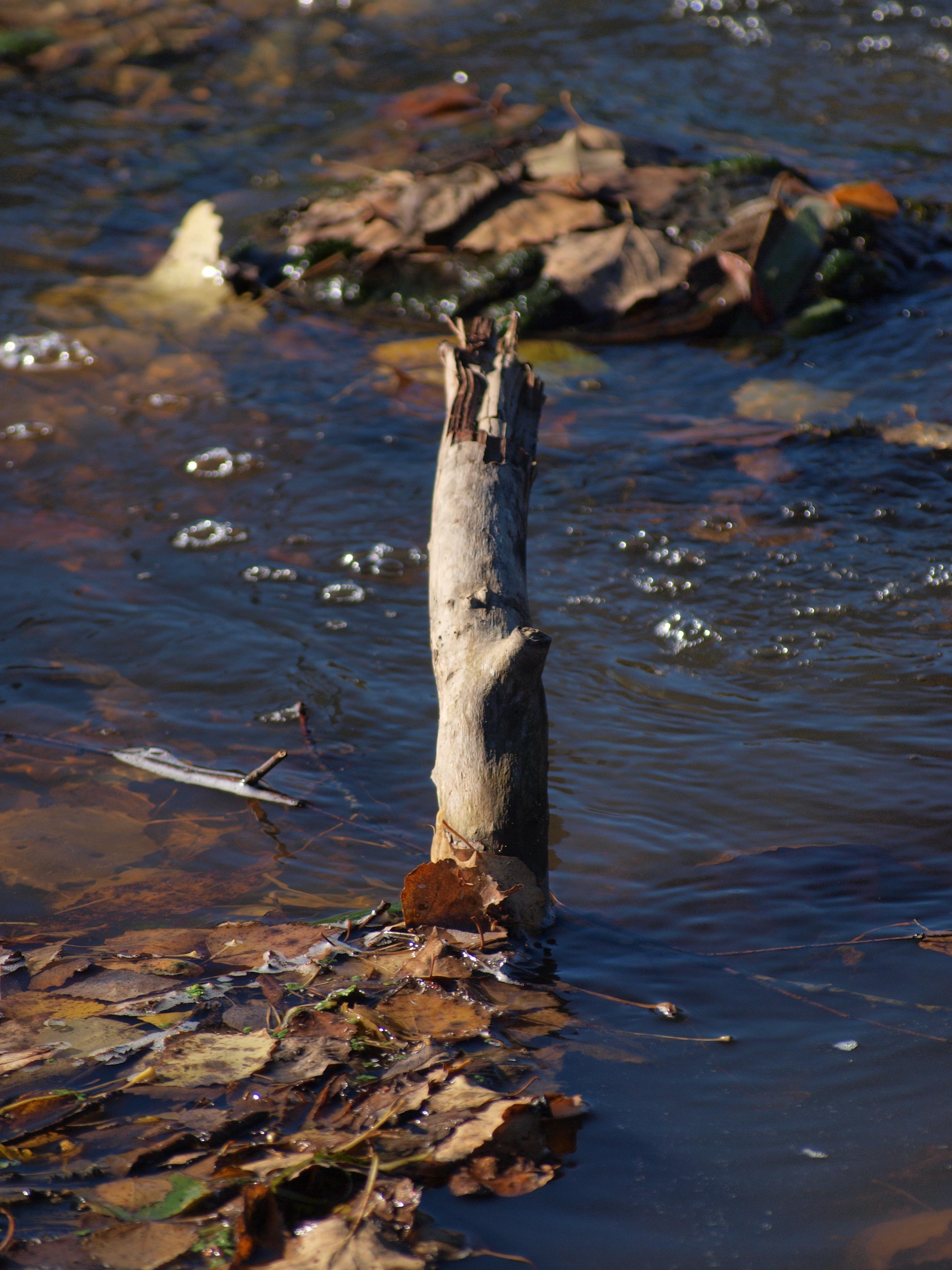 Branch, Fall, Leaf, Stick, Water, HQ Photo