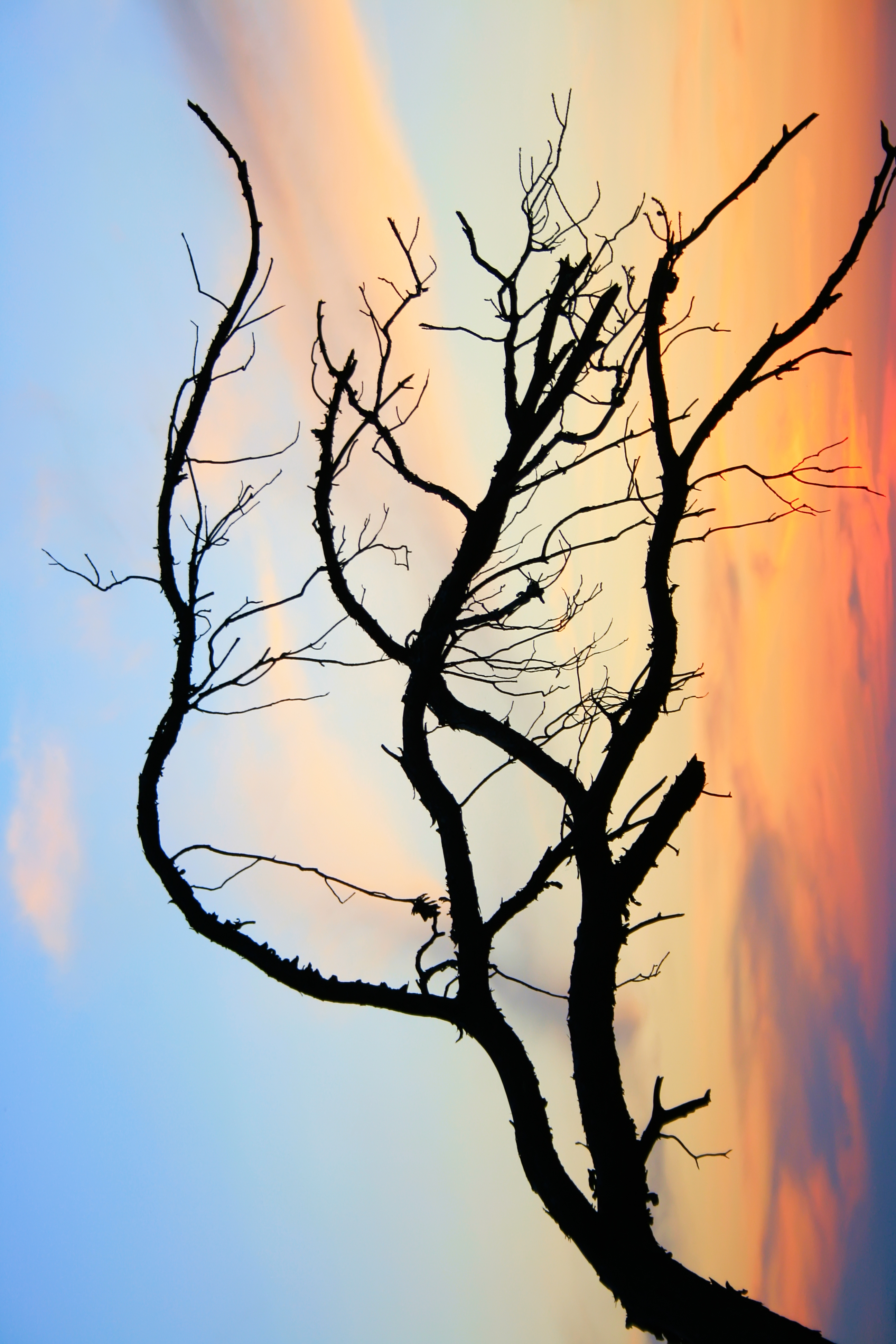 Branch, Bare, Clouds, Sky, Tree, HQ Photo
