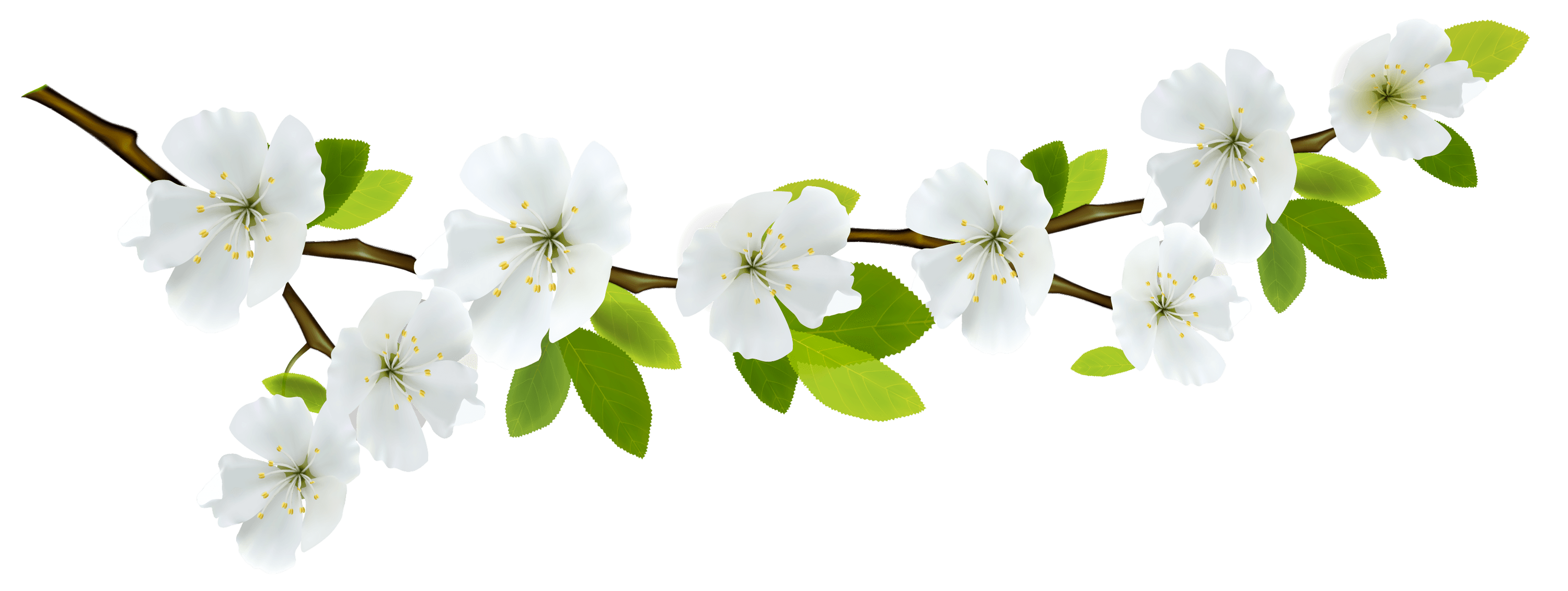 Branch and Flowers transparent PNG - StickPNG