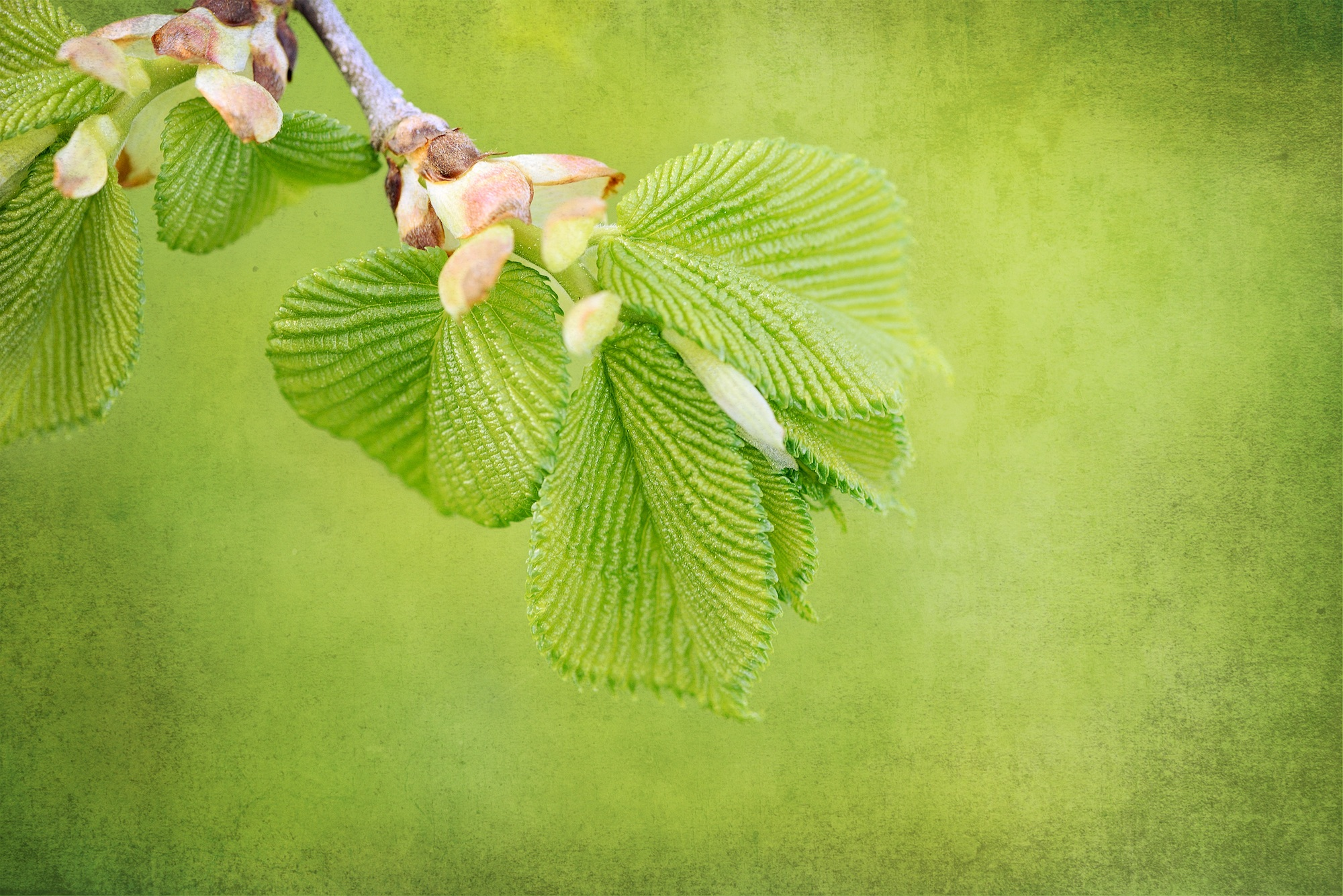 Branch, Green, Leaf, Leave, Nature, HQ Photo