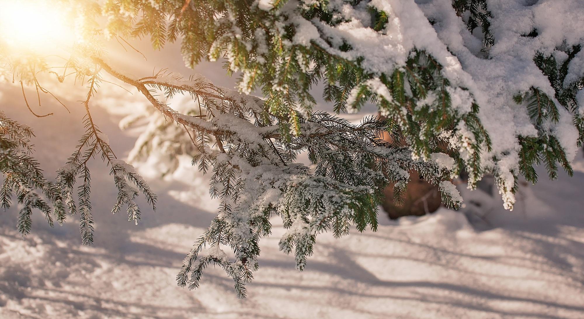Branch, Frozen, Green, Ice, Snow, HQ Photo