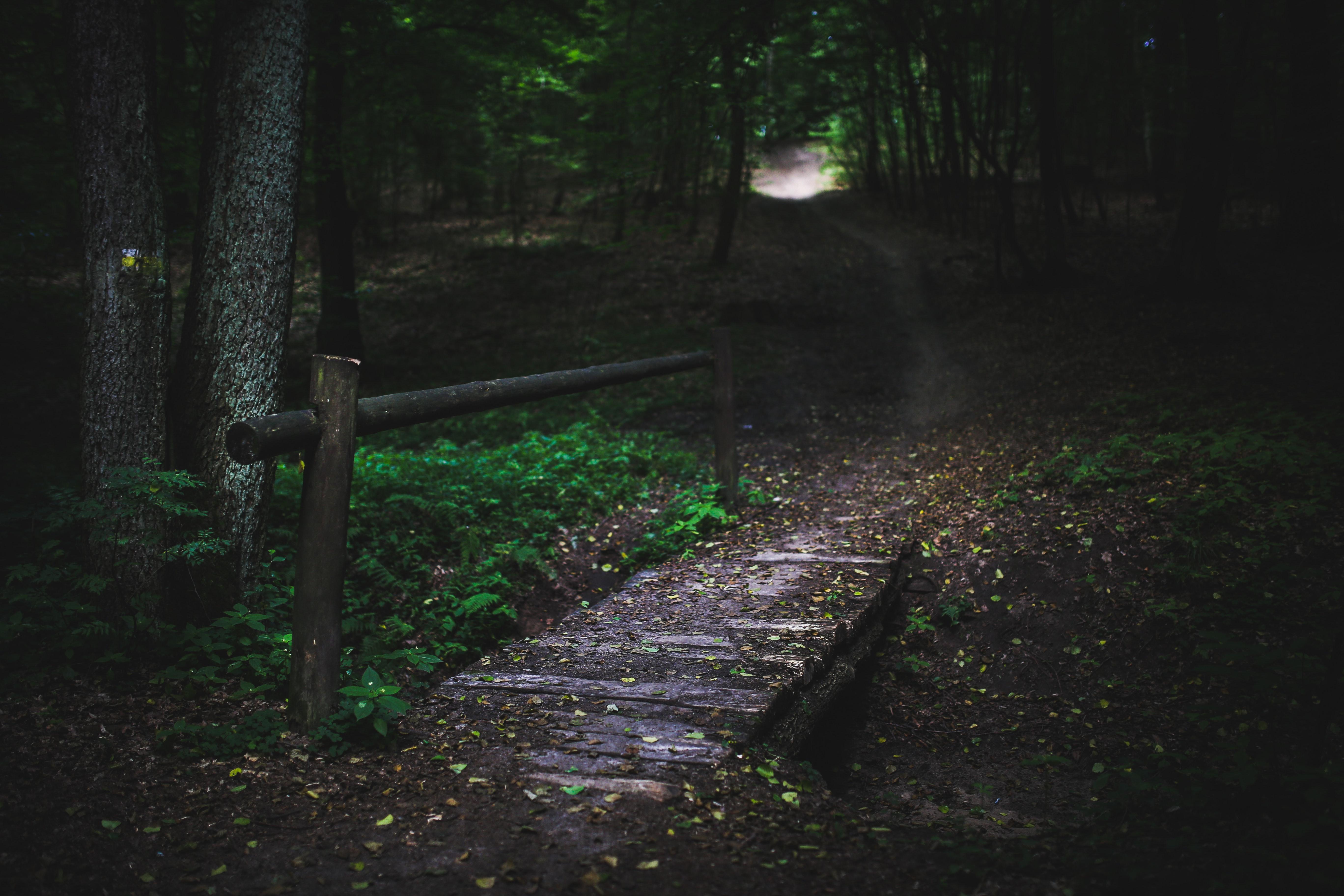 Bridge in the forest II, Dark, Footbridge, Forest, Mystical, HQ Photo