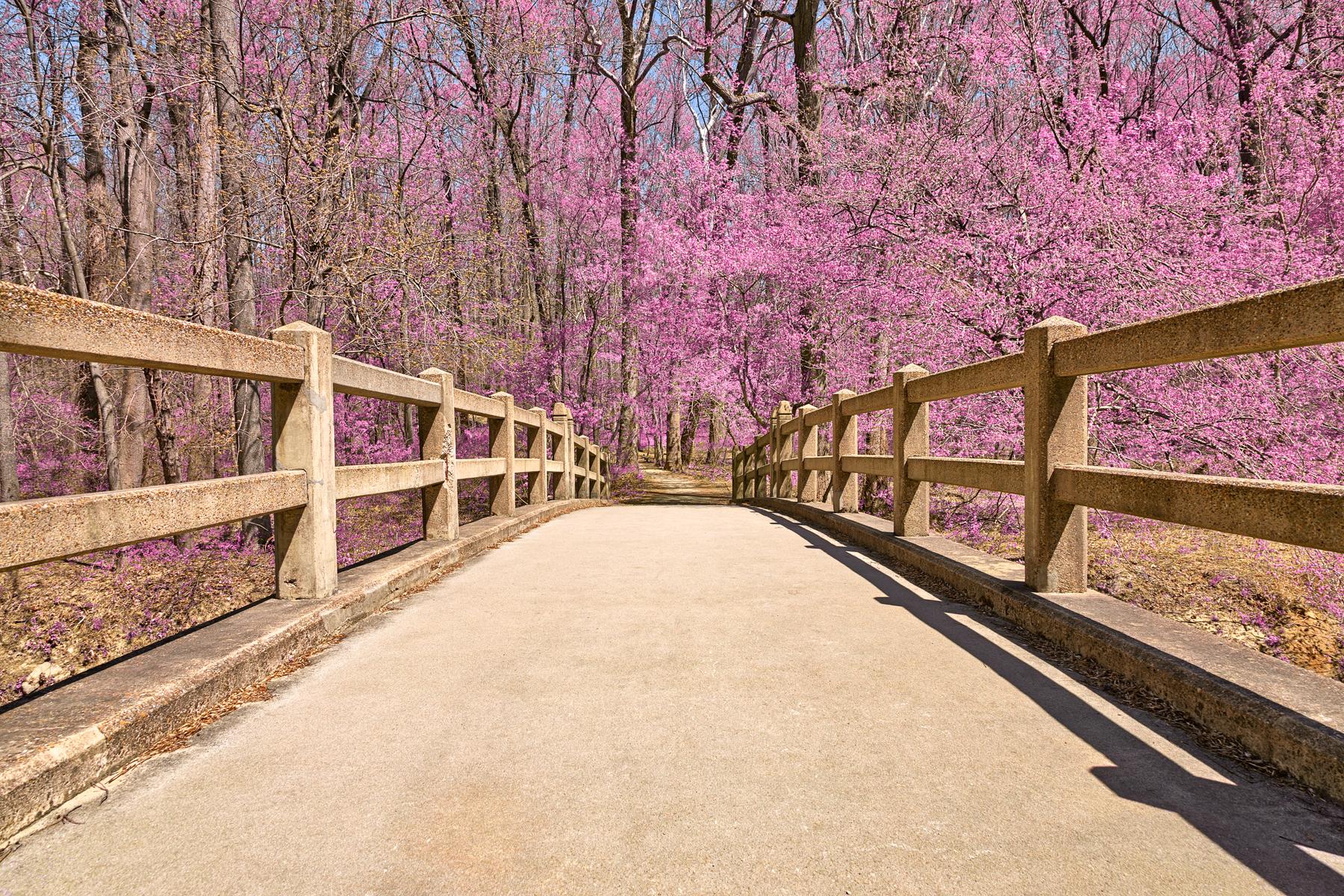 Bridge to pink paradise - hdr photo