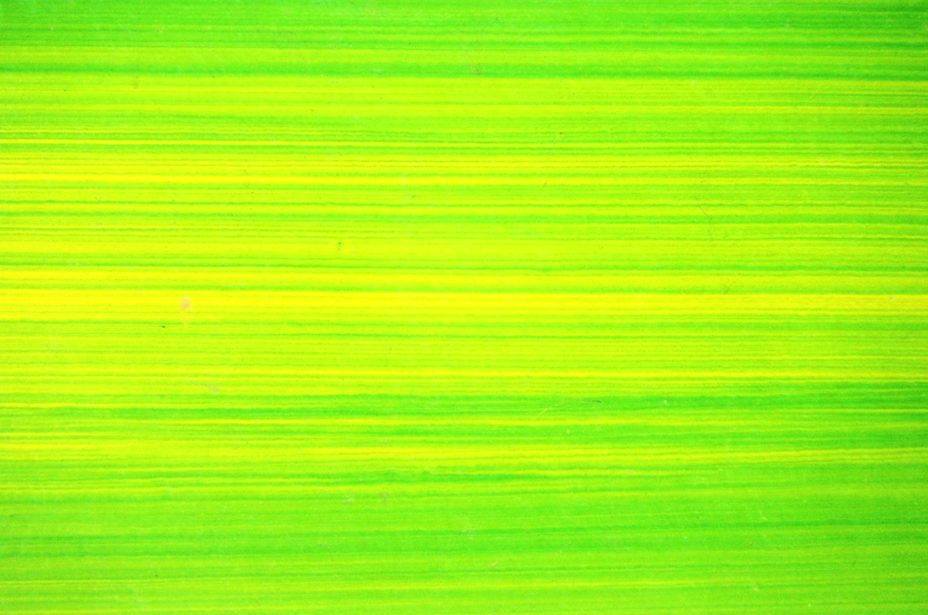 Bright green lines background photo