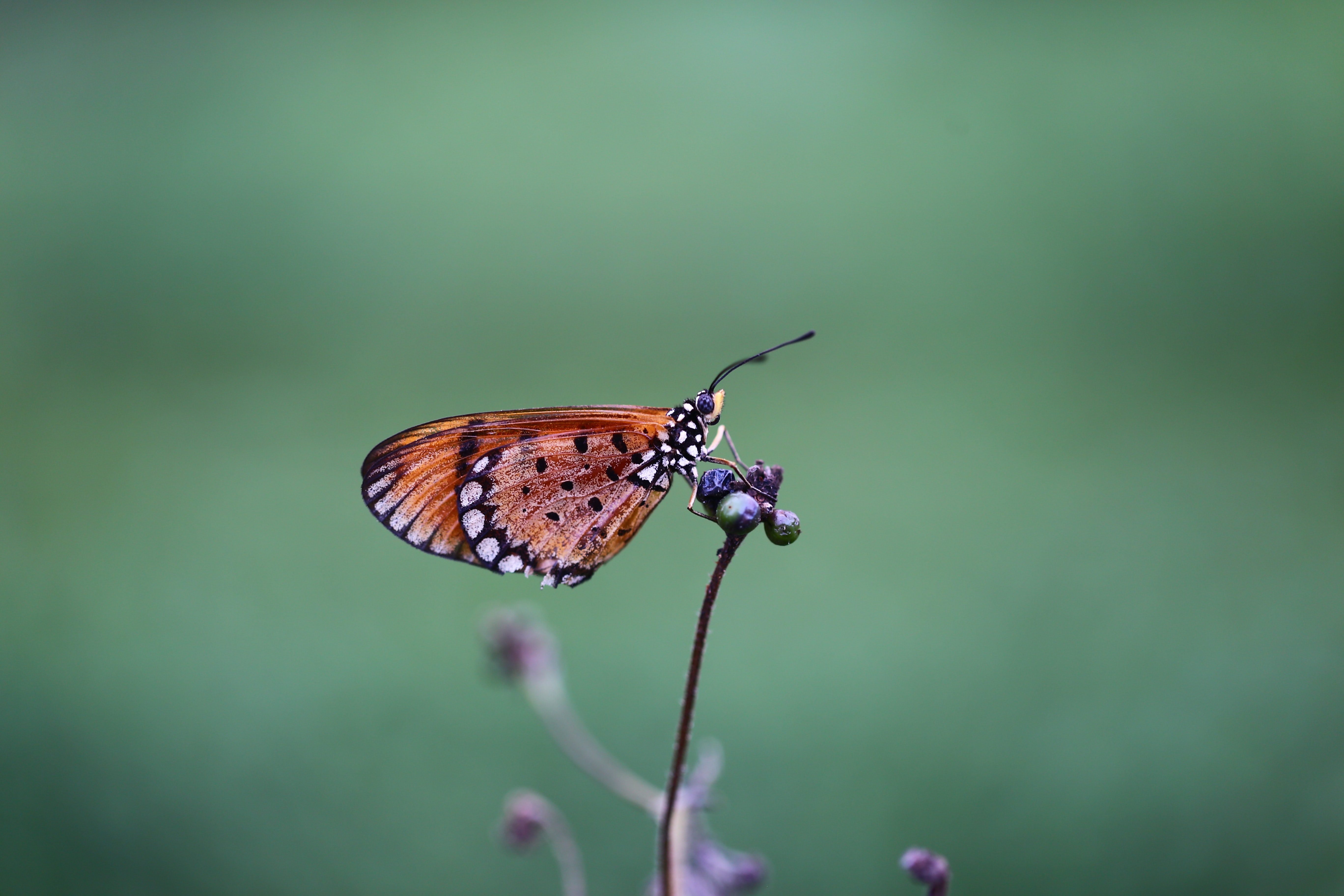 Brown and black shallow focus photography of a butterfly