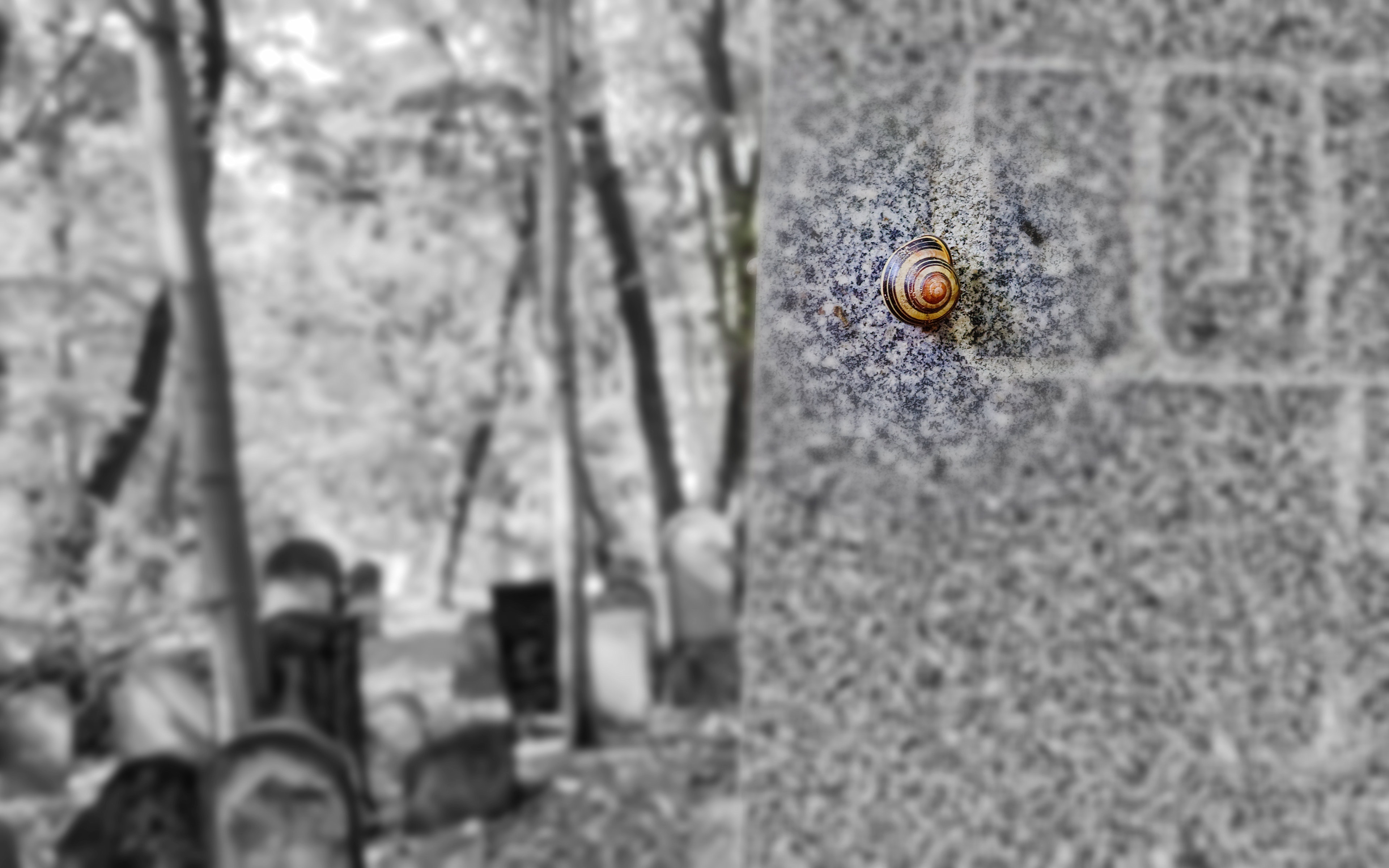 Brown and Black Snail Crawling on Wall, Black and white, Nature, Tombstones, Tomb, HQ Photo