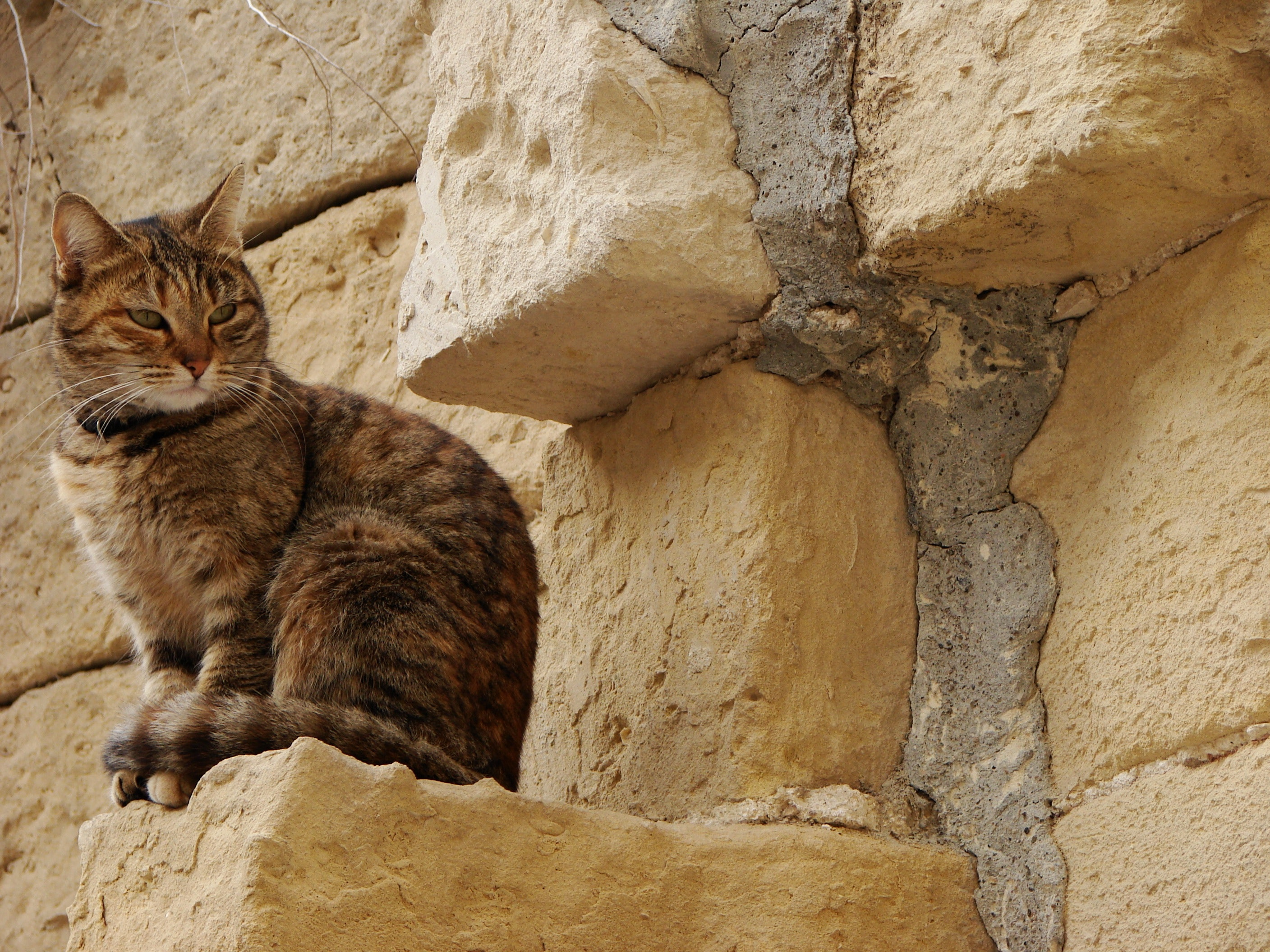 Brown and Black Tabby Cat, Adorable, Limestone, Tabby, Stripe, HQ Photo