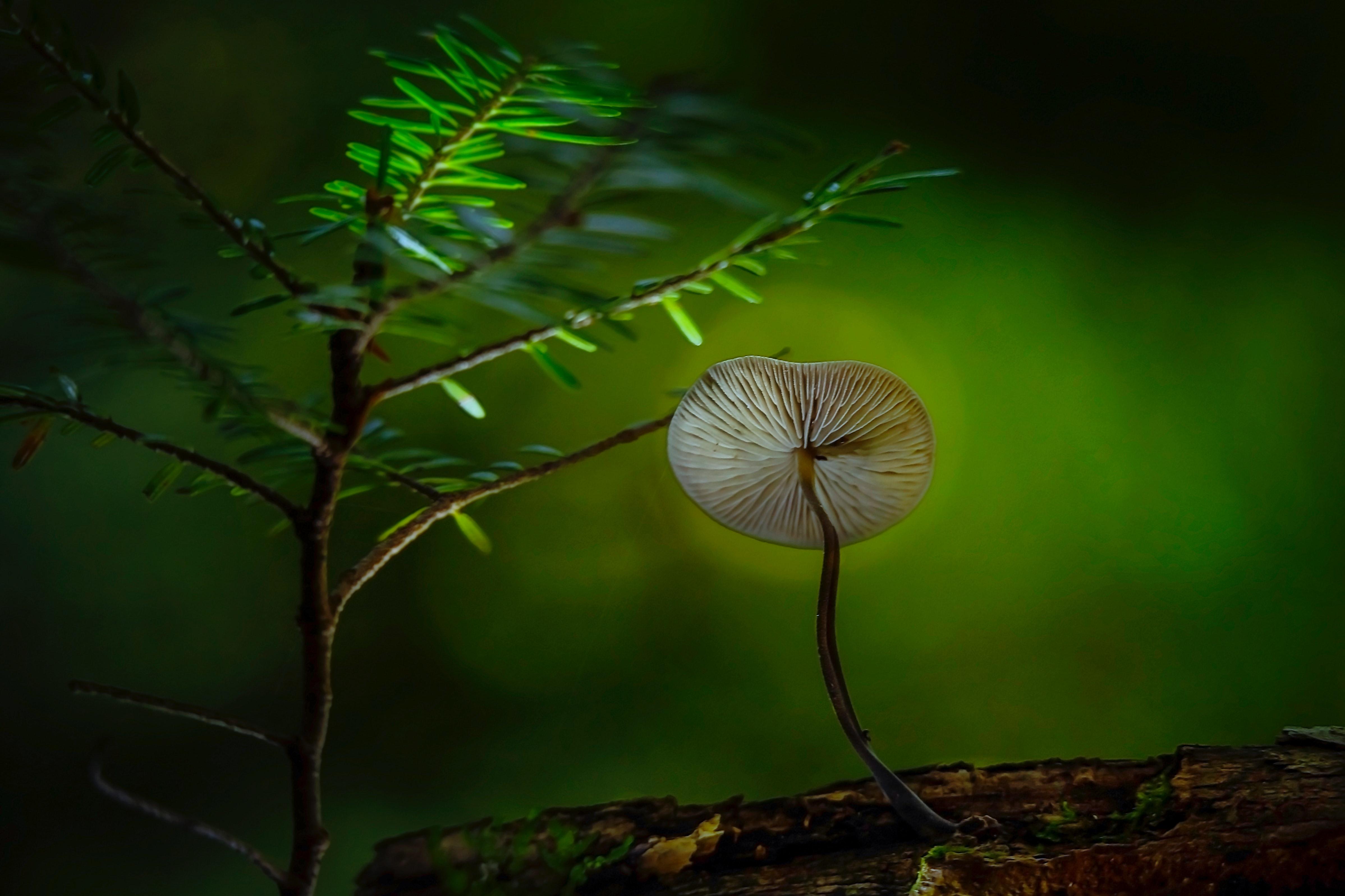 Brown and Gray Mushroom on Brown Sand Near Green Plant, Biology, Miniature, Wild, Tree, HQ Photo