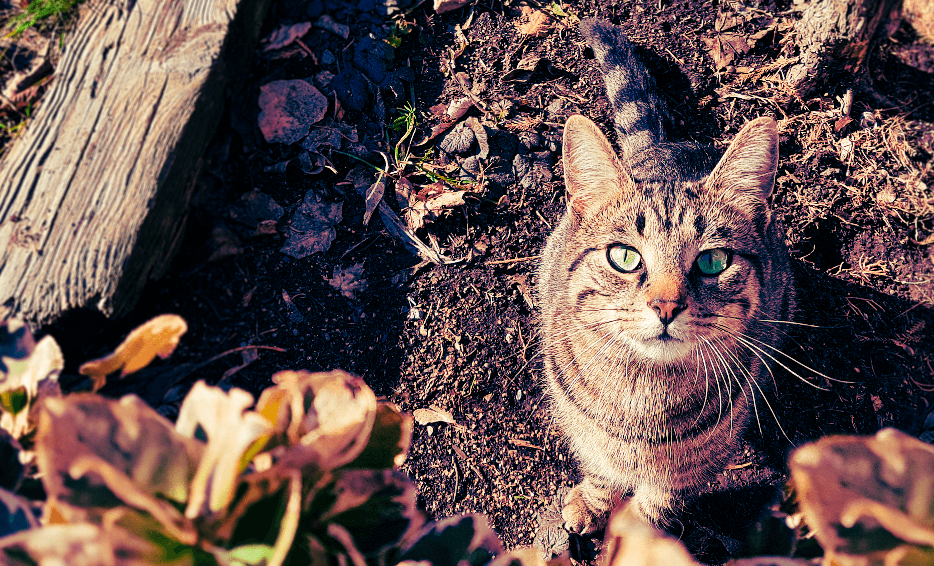 Brown and gray tabby cat photo