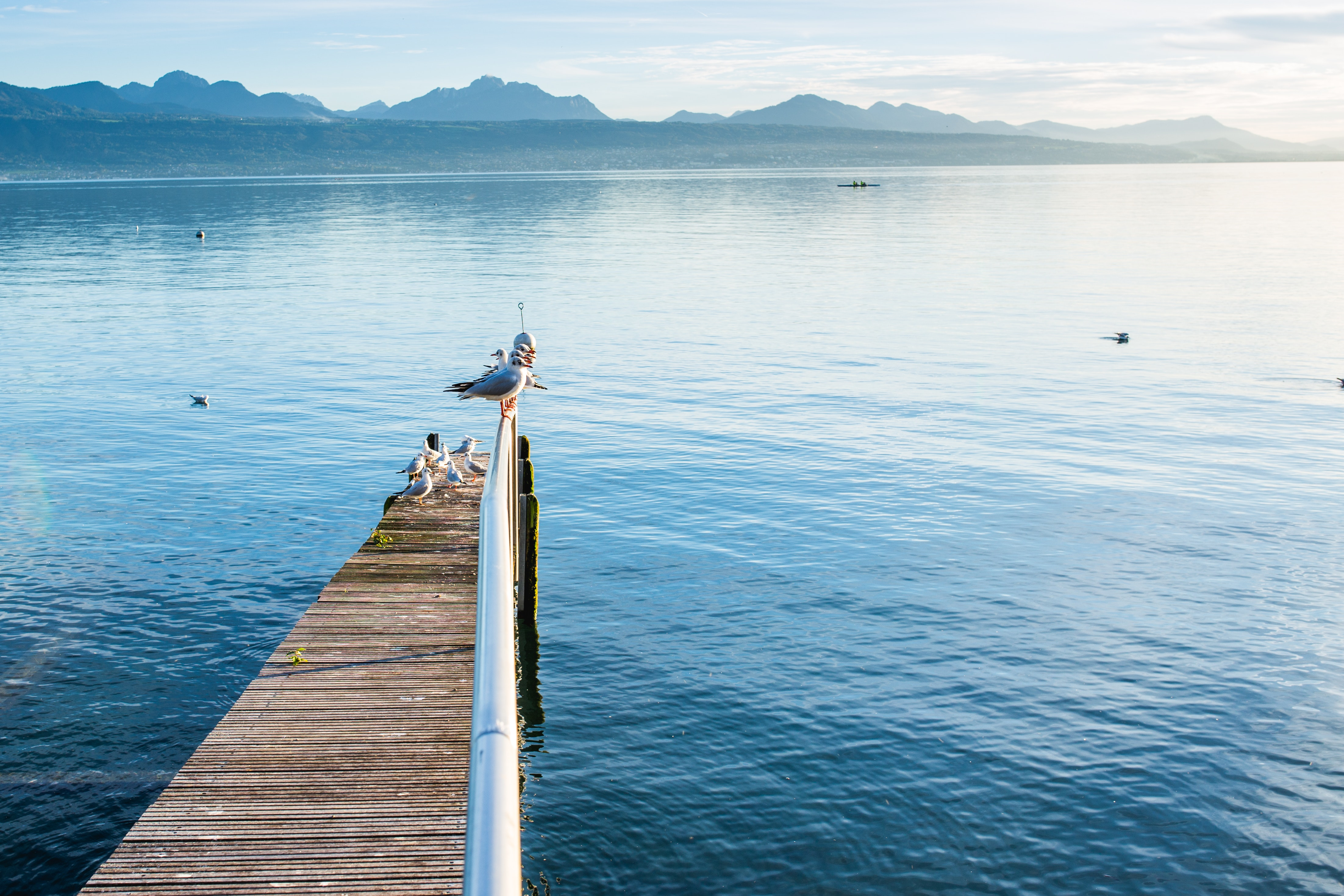 Brown and Silver Pier over Body of Water, Birds, Dock, Gulls, Mountains, HQ Photo