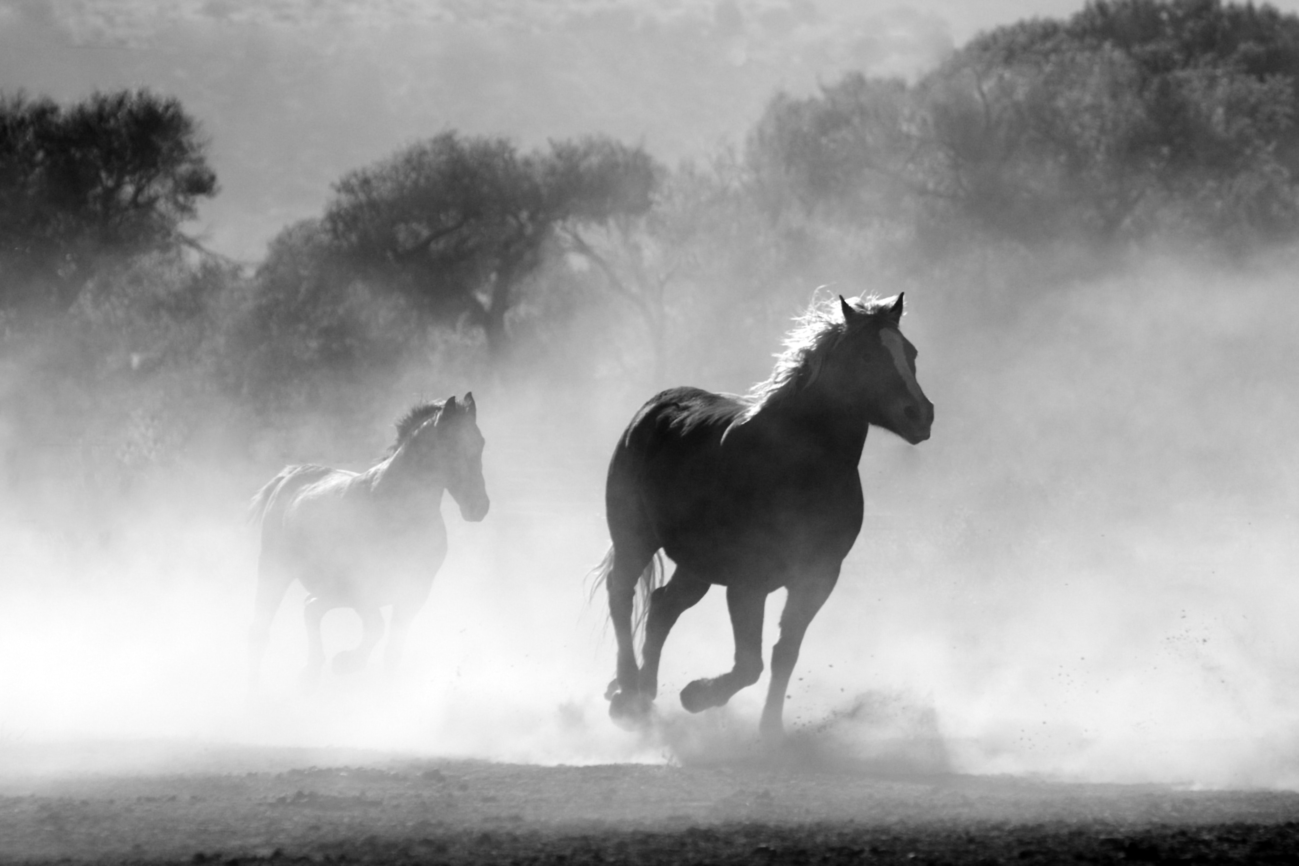 Free photo brown and white stallions running in a field nature brown and white stallions running in a field nature motion speed sprint voltagebd Image collections