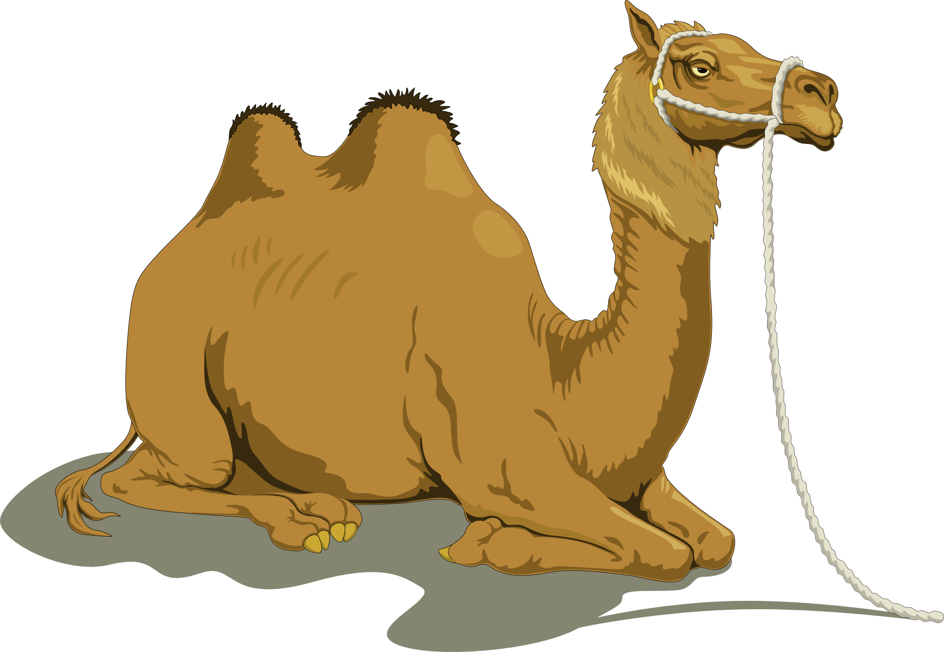 Brown Lying camel vector | Free PSD,Vector,Icons