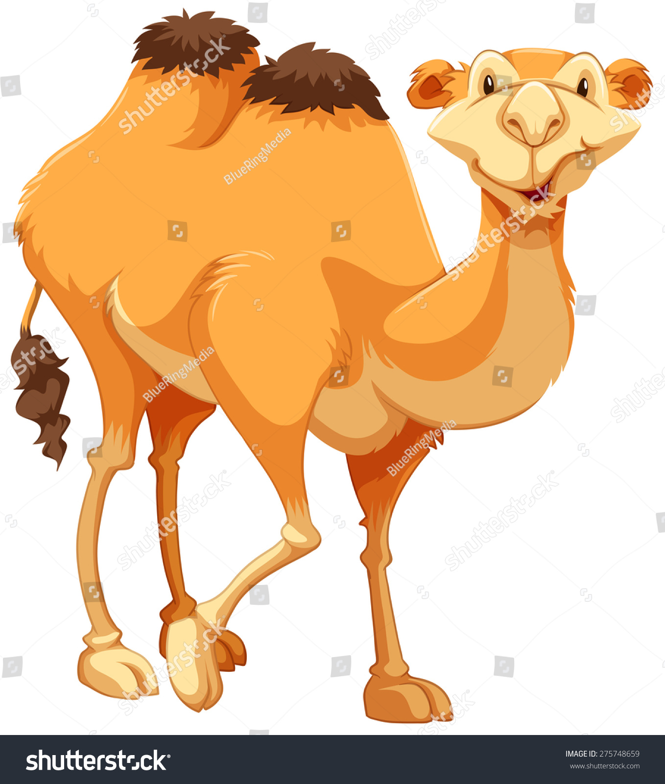 Walking Brown Camel On White Background Stock Photo (Photo, Vector ...