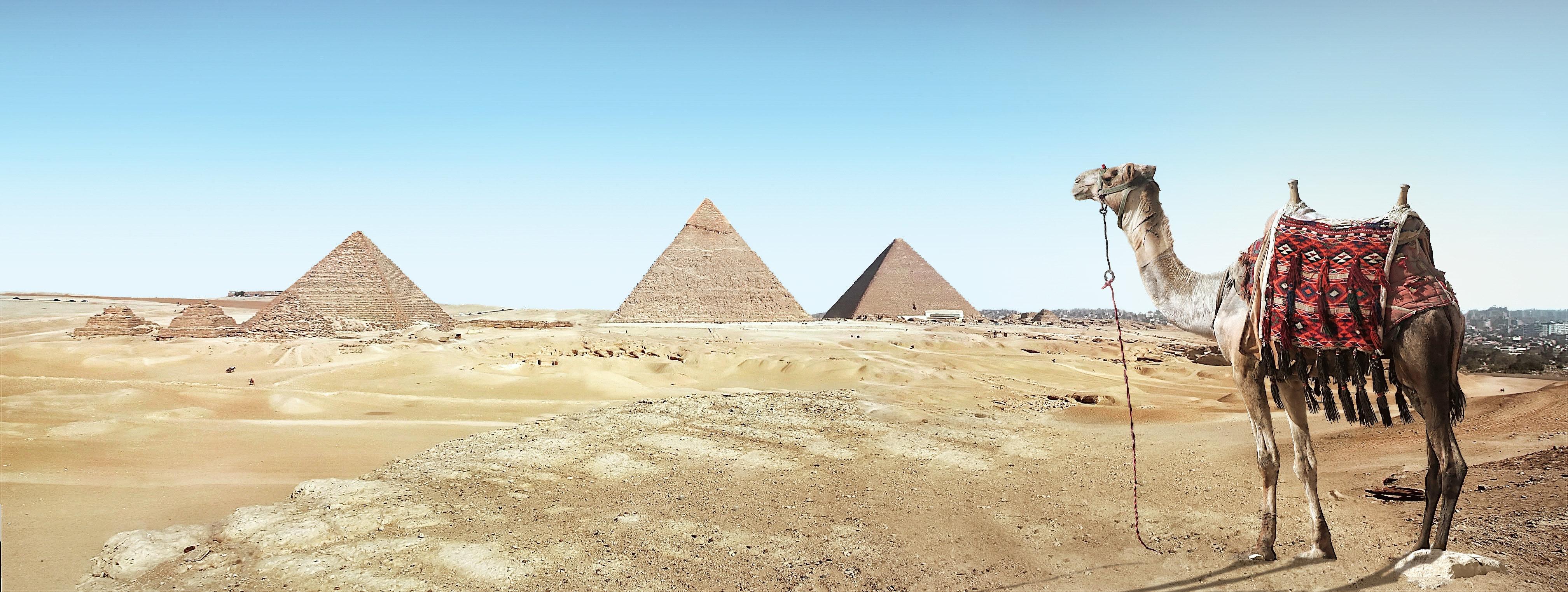 Brown Camel, Ancient, Pyramids, Tourist spot, Tourism, HQ Photo