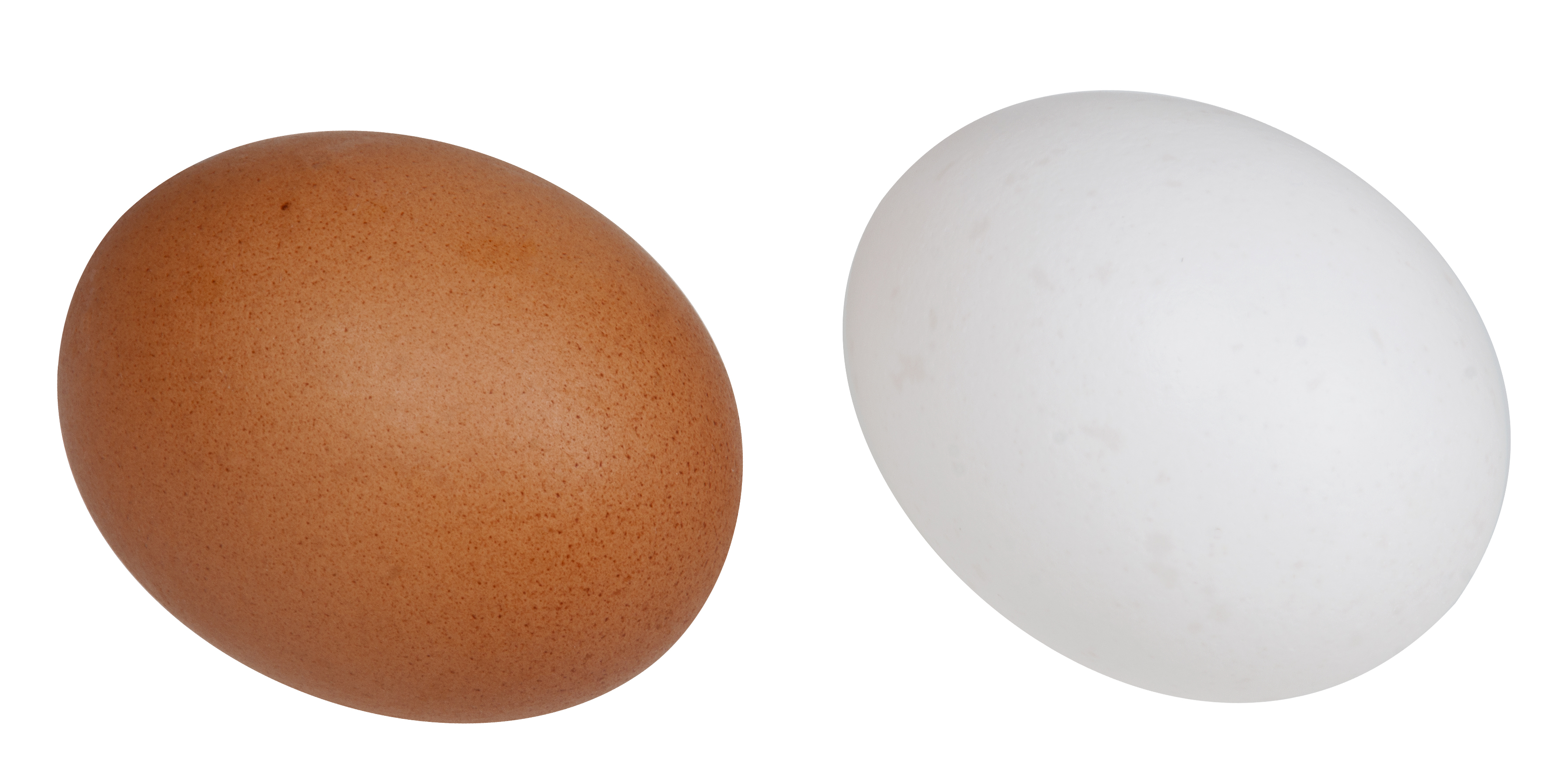 File:White-&-Brown-Eggs.jpg - Wikimedia Commons