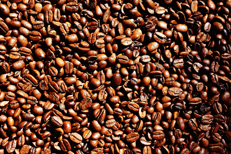 Free stock photo of caffeine, coffee, coffee beans