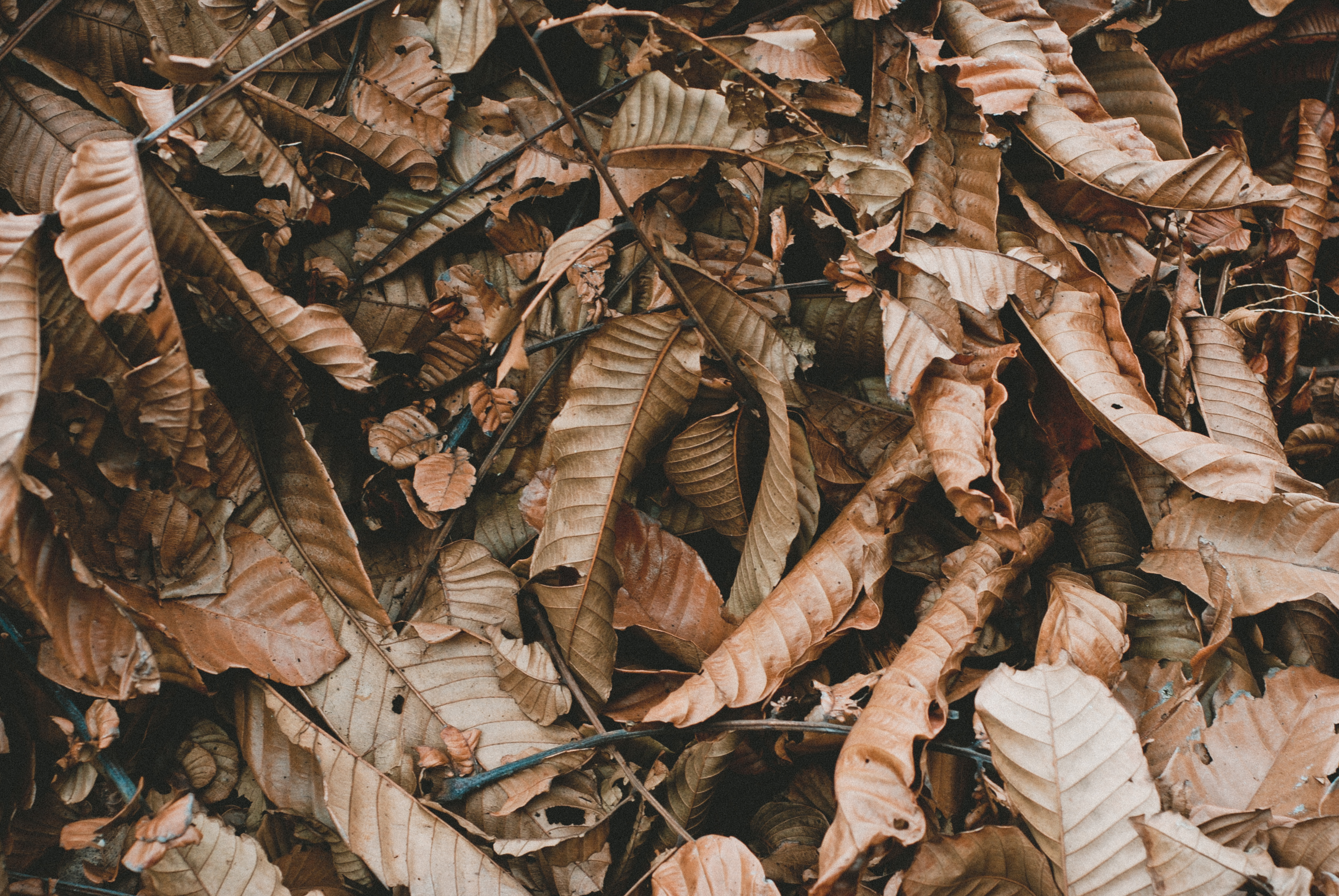 Brown dried leaves photo