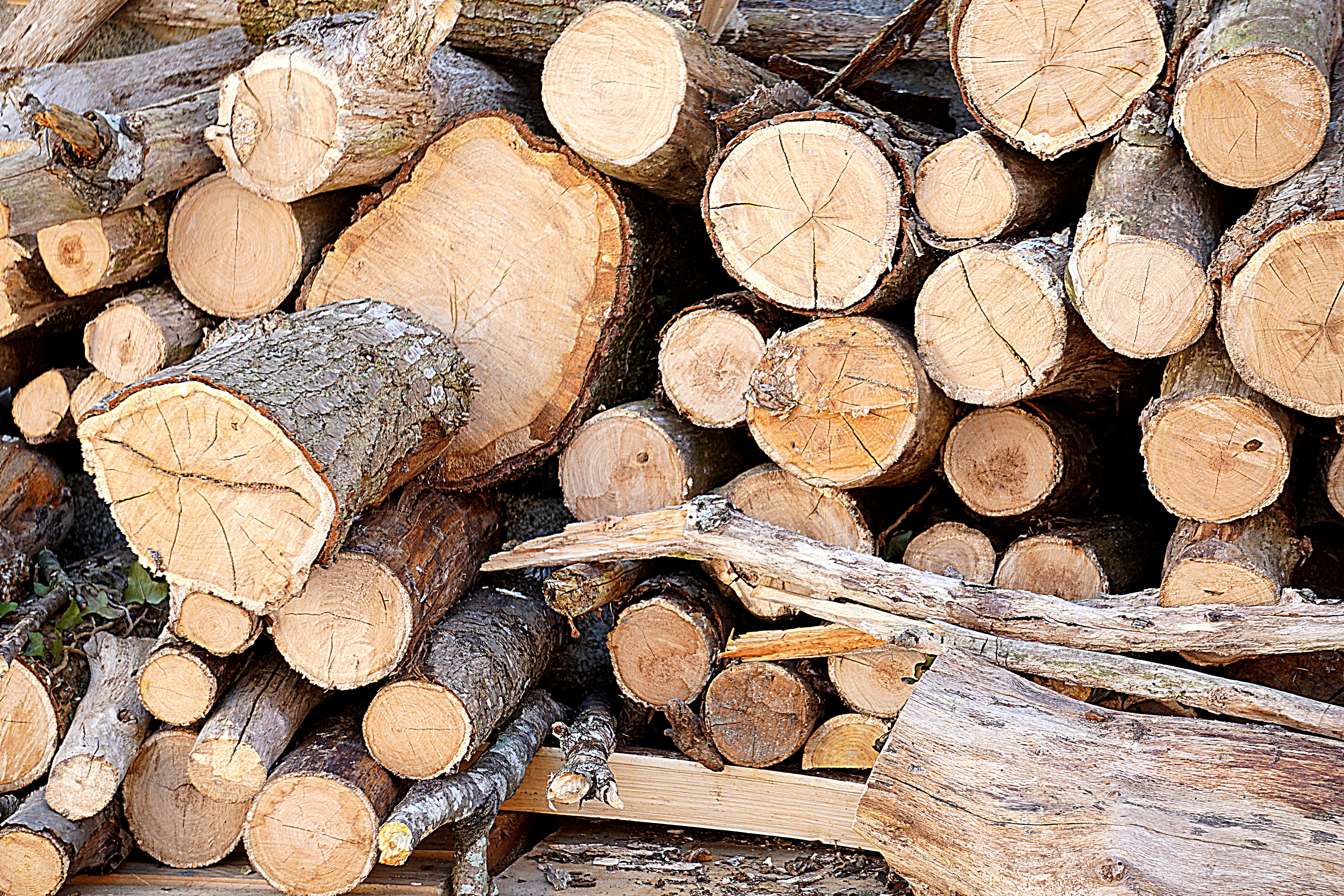 Brown Fire Wood, Bark, Timber, Wooden logs, Wooden, HQ Photo