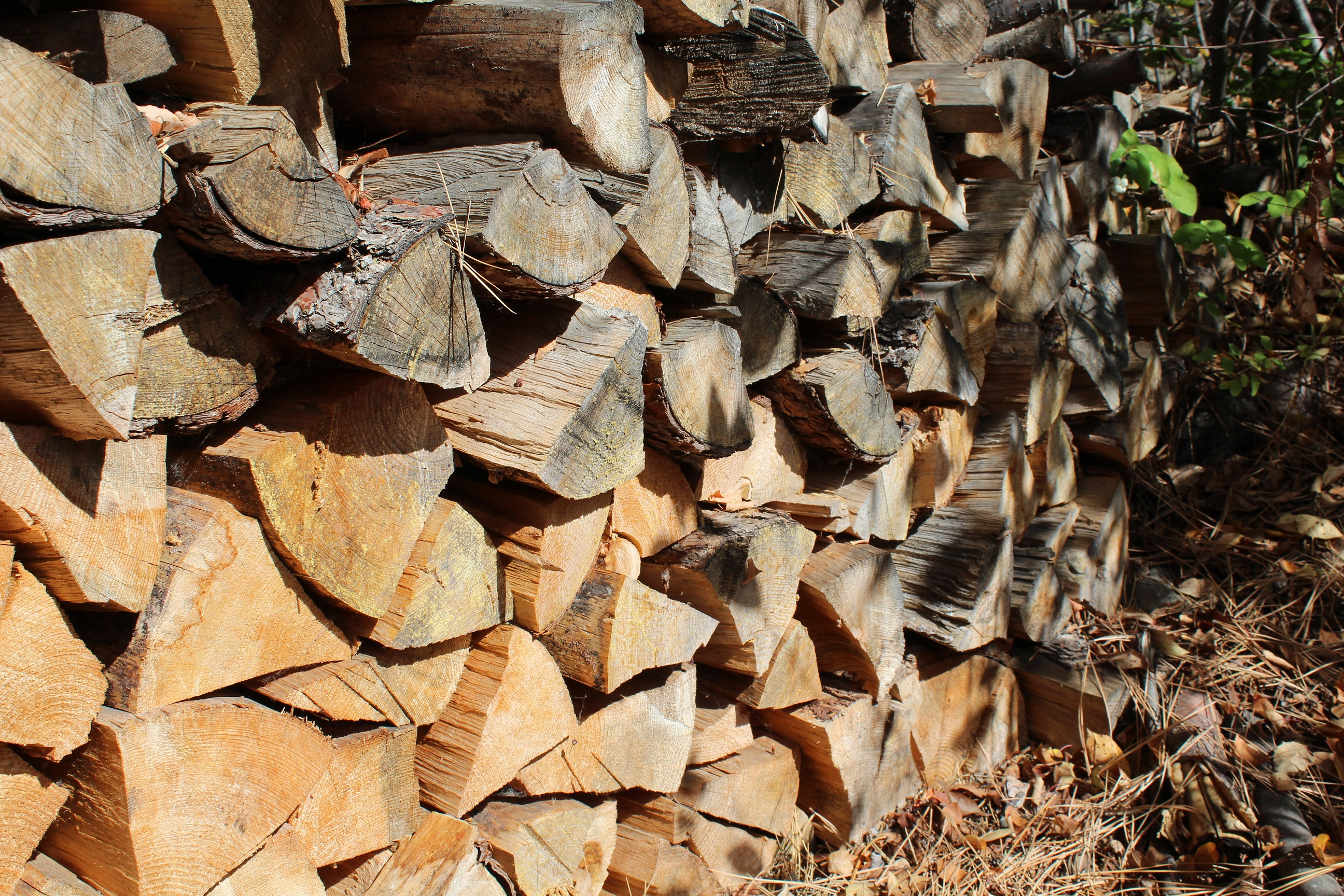 Unintended Consequences of Transporting Firewood | The EPA Blog
