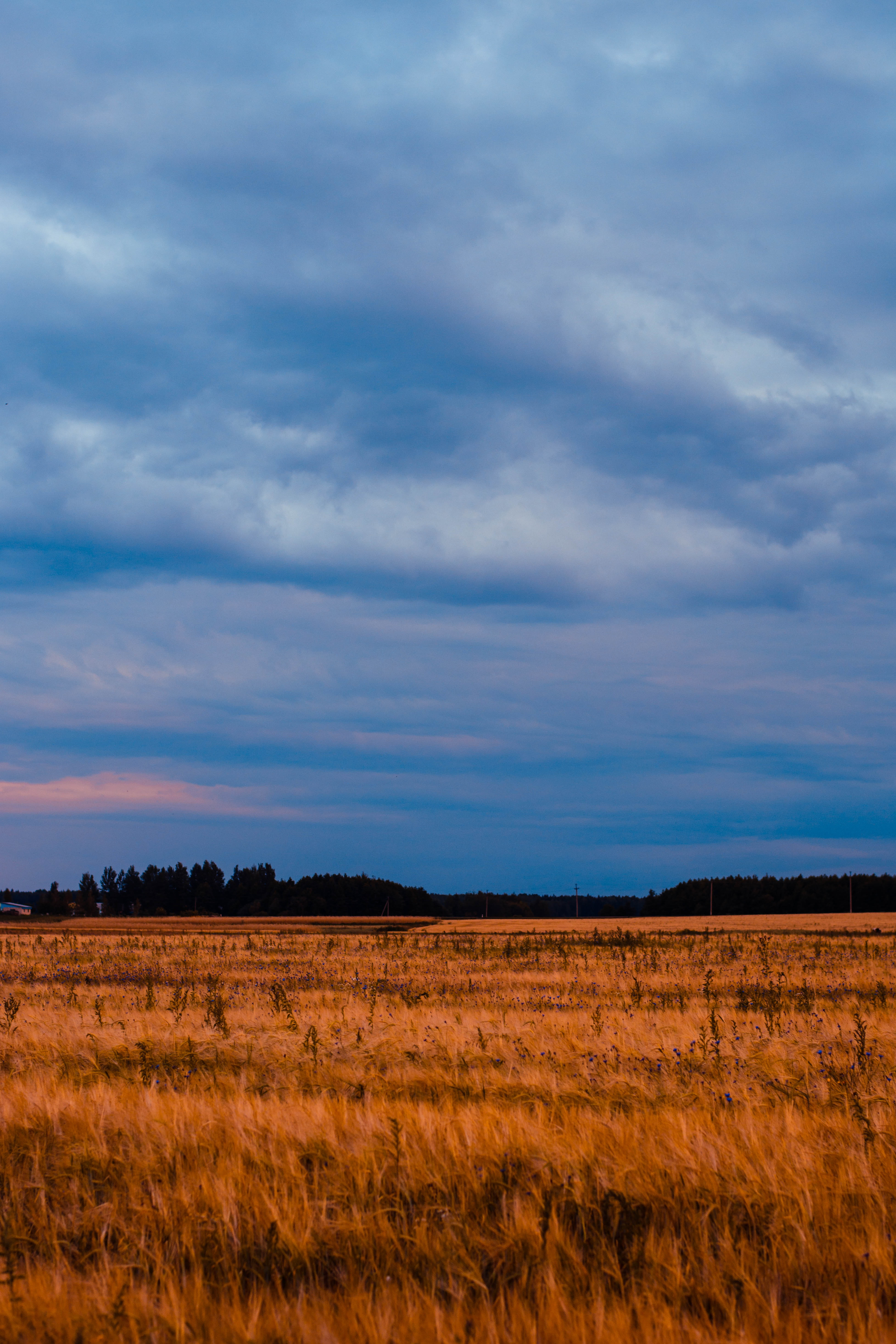 Brown grass field under blue and white cloudy sky photo
