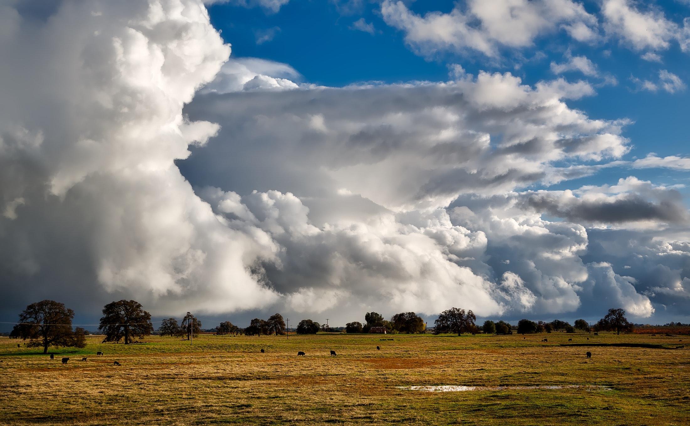 Brown grass field under cloudy sky photo
