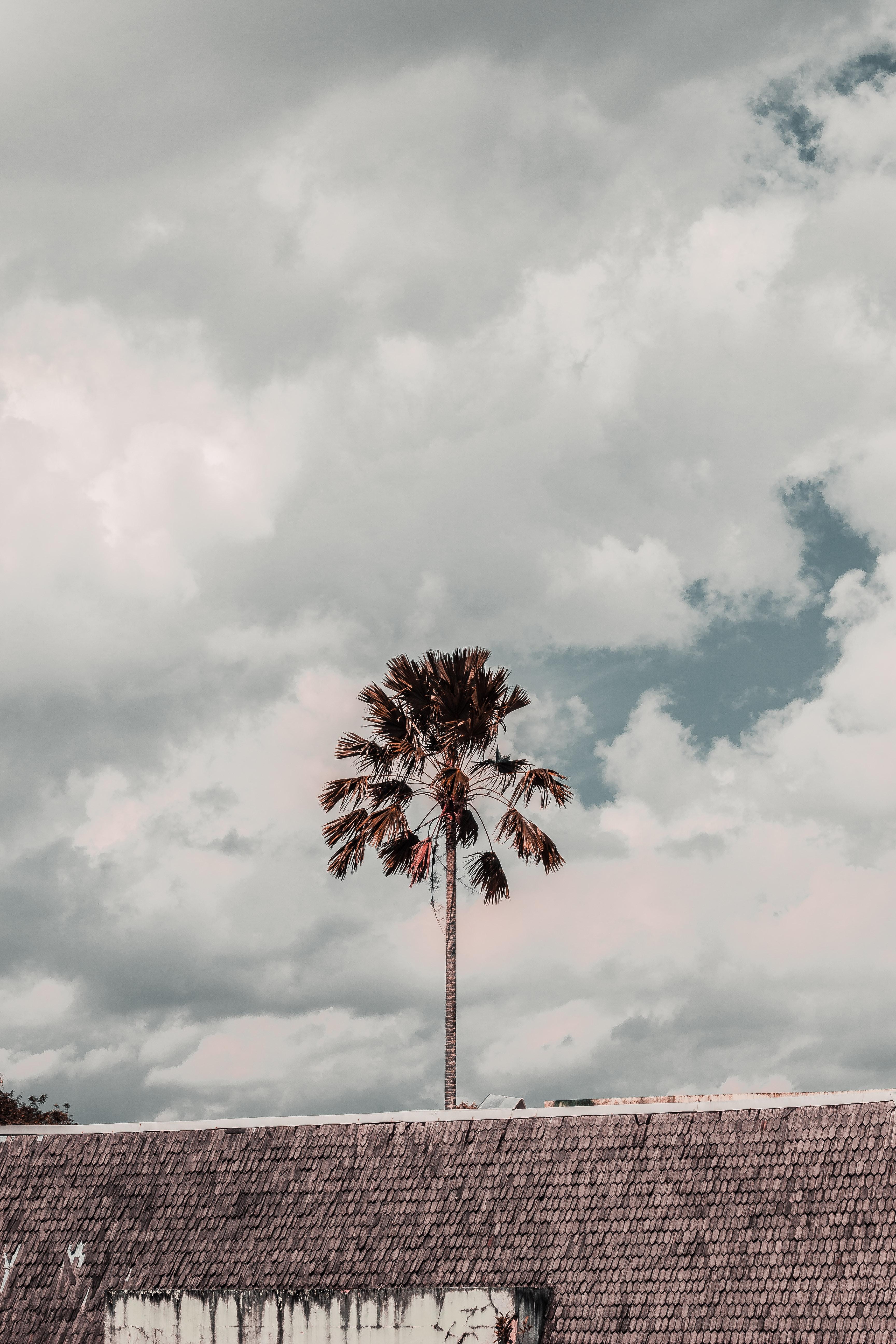 Brown leafed tree under cloudy skies photo