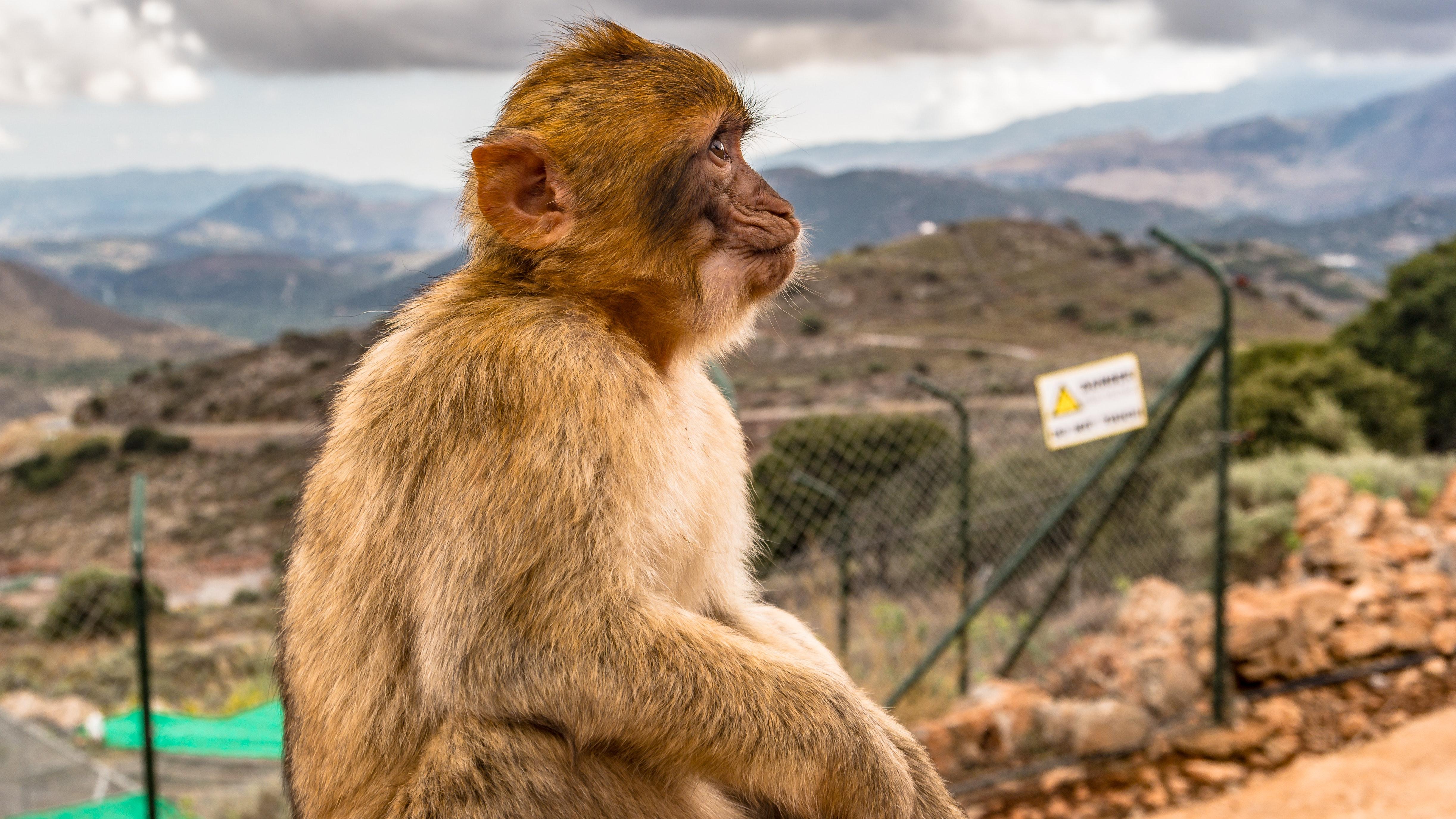 Brown monkey sitting on ground photo