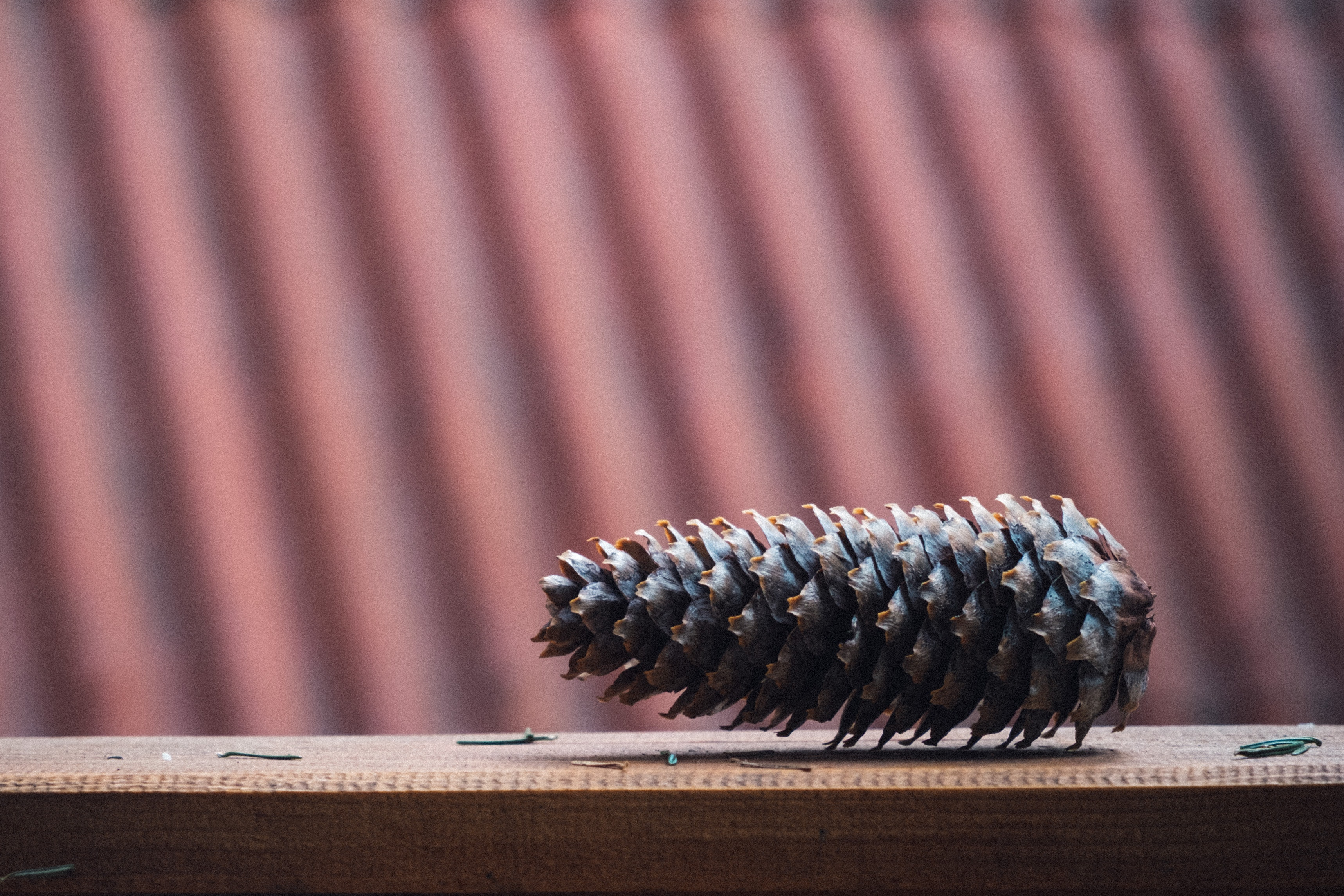 Brown pinecone on brown wooden surface photo