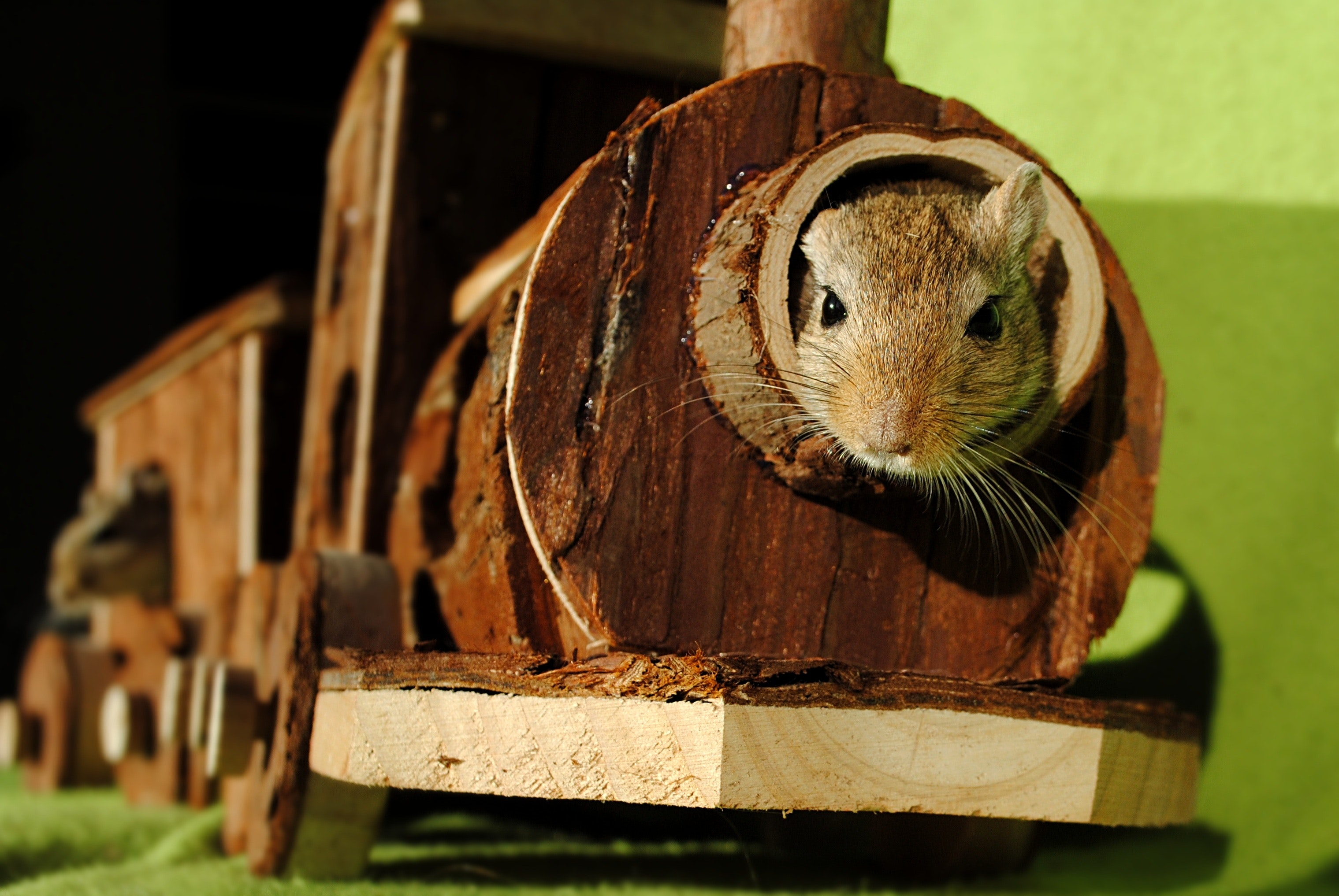 Brown squirrel inside of brown wooden train miniature photo