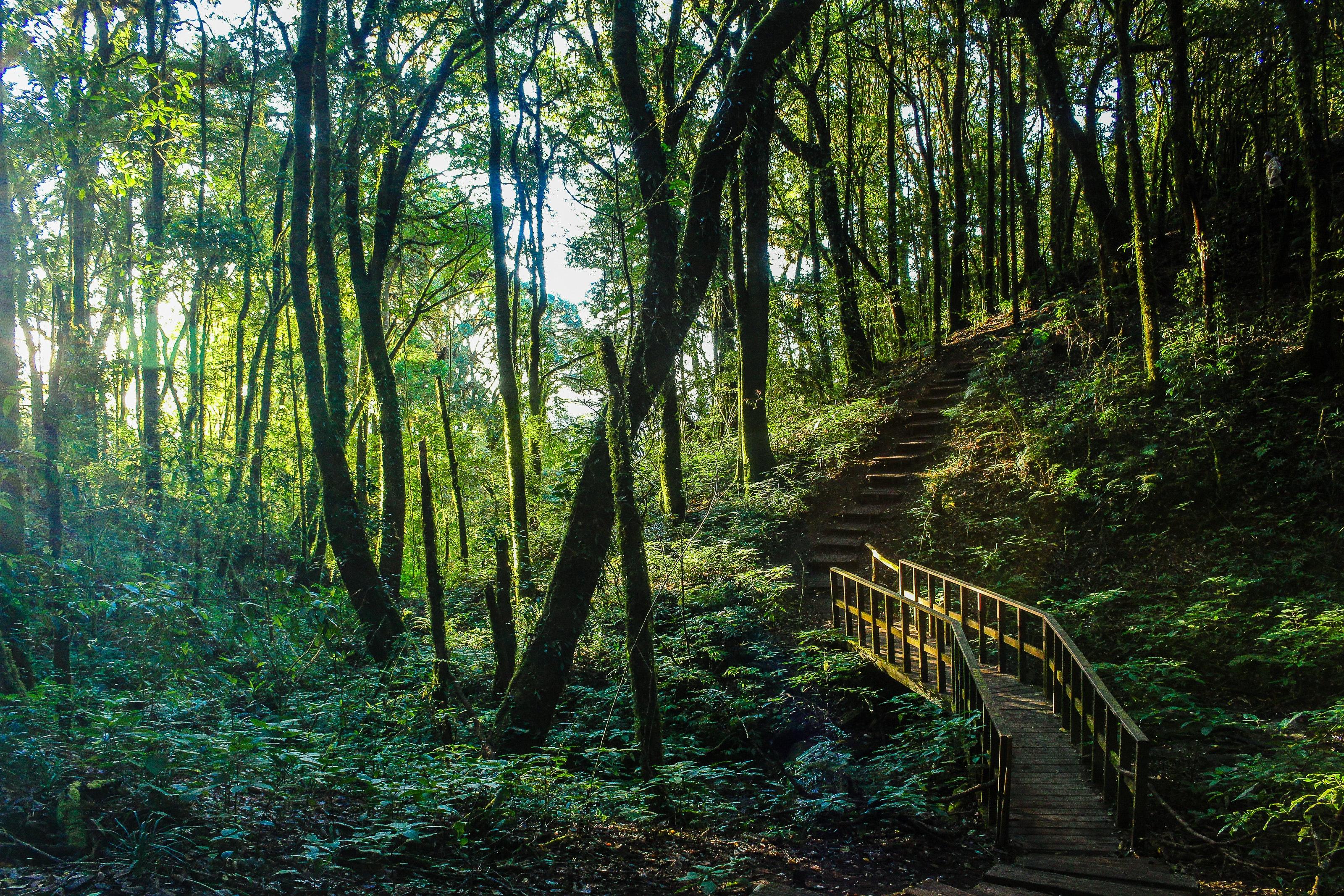 Brown stair between trees photo
