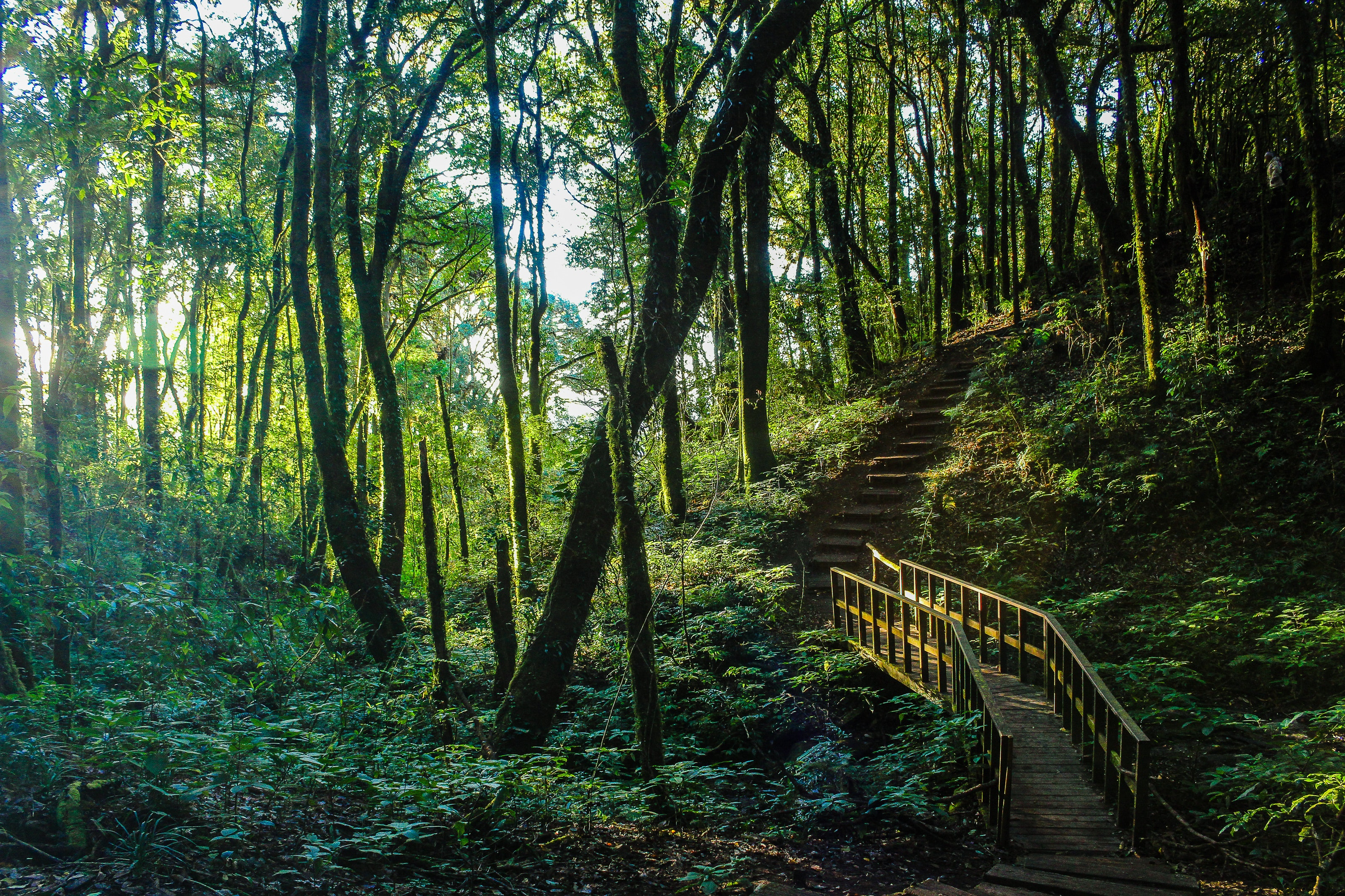 Brown Stair Between Trees, Scenic, Steps, Scenery, Rainforest, HQ Photo