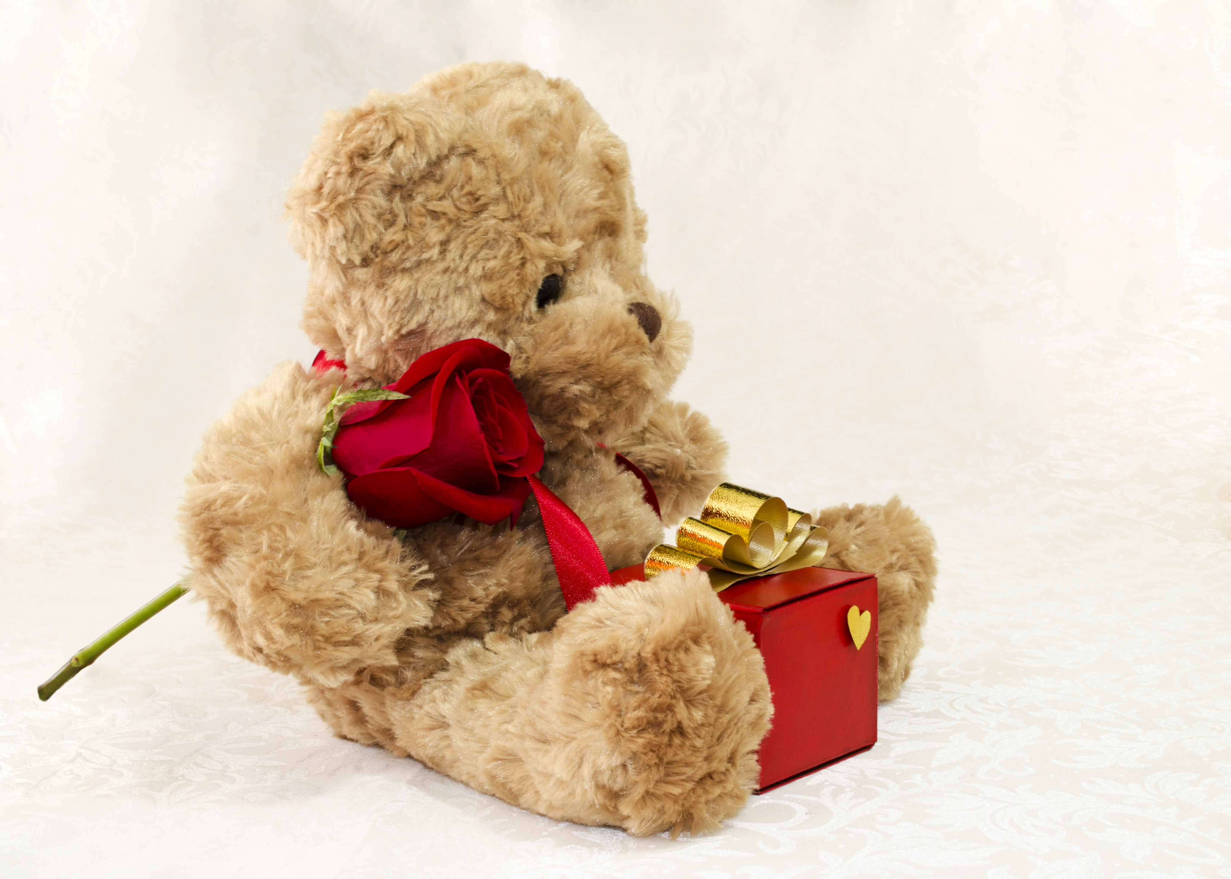 Brown teddy bear with a rose and a gift photo