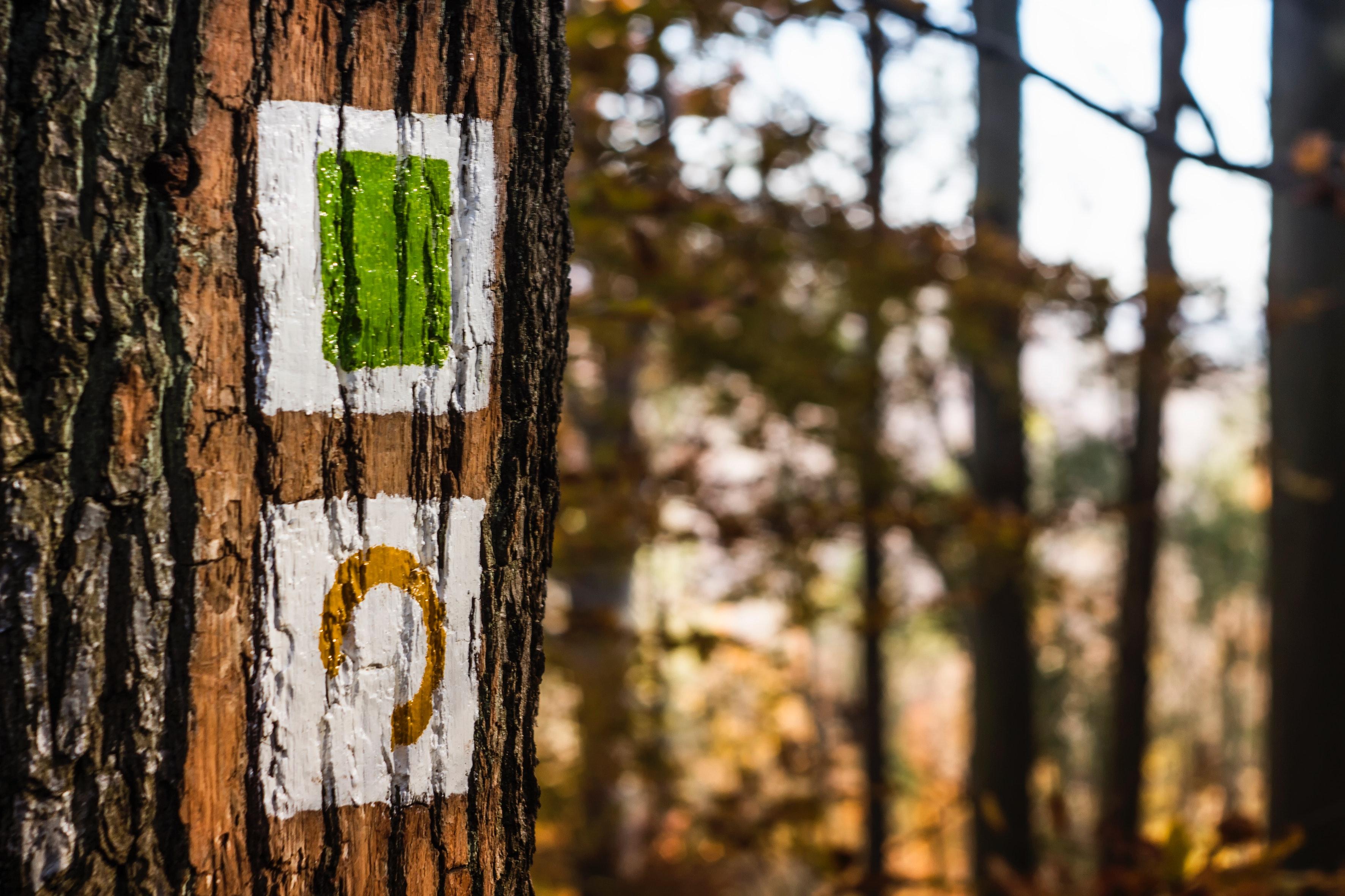Brown Tree, Tree bark, Paintings, Tree trunk, Trunk, HQ Photo