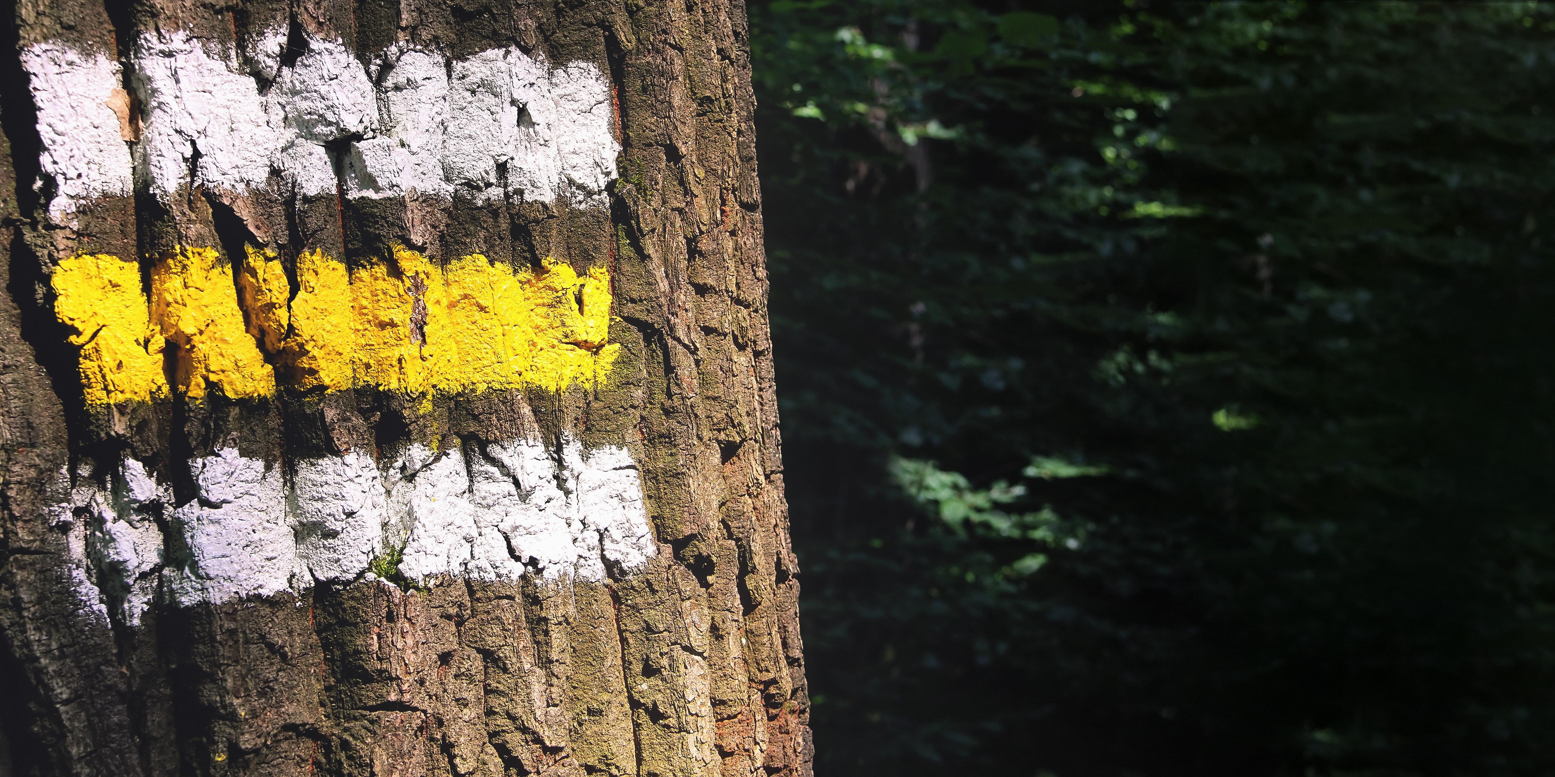 Brown Tree Trunk, Bark, Paint, Trees, Tree bark, HQ Photo