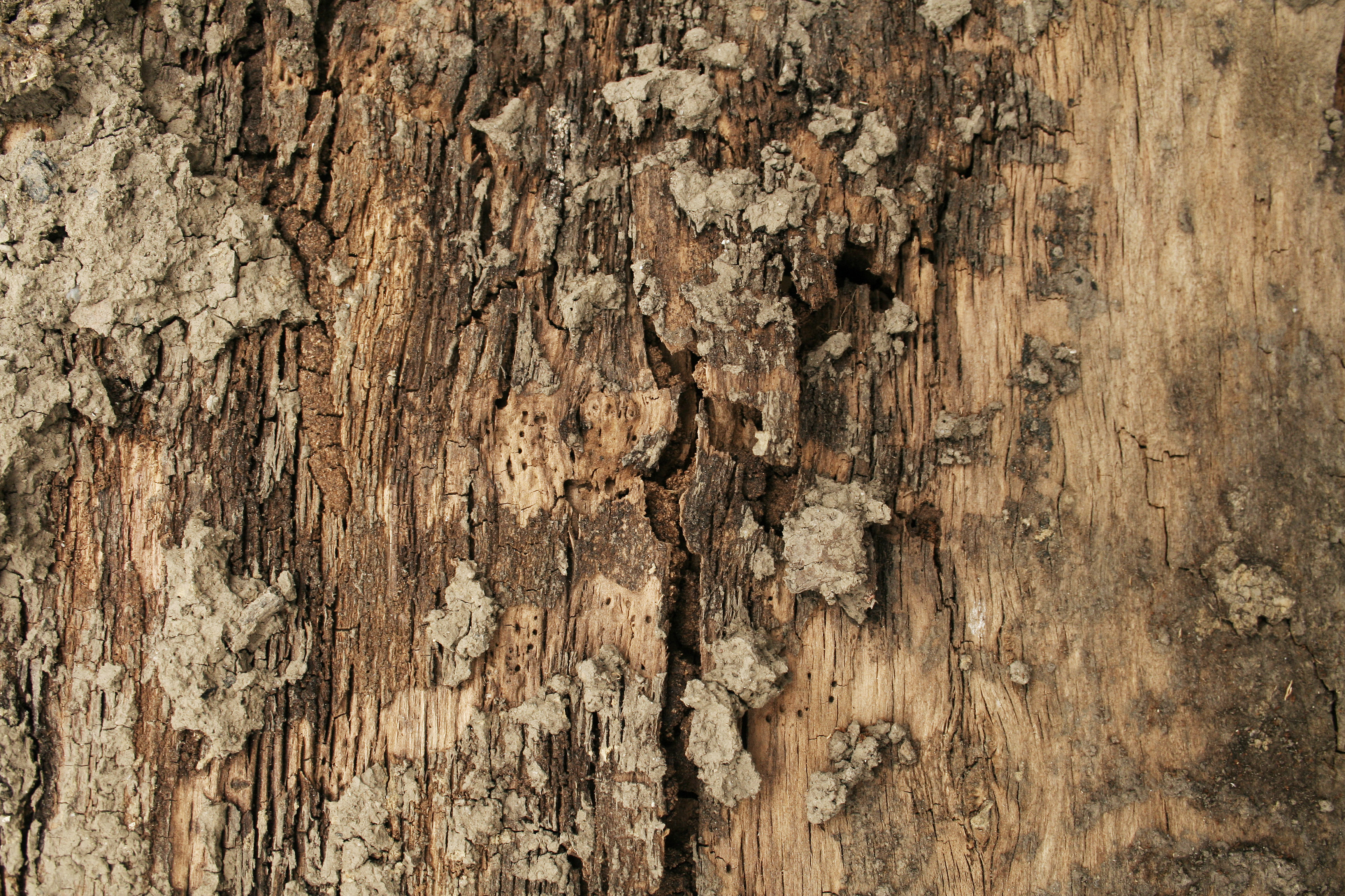 Free stock wood textures,tree bark, cg textures, free download, wood ...