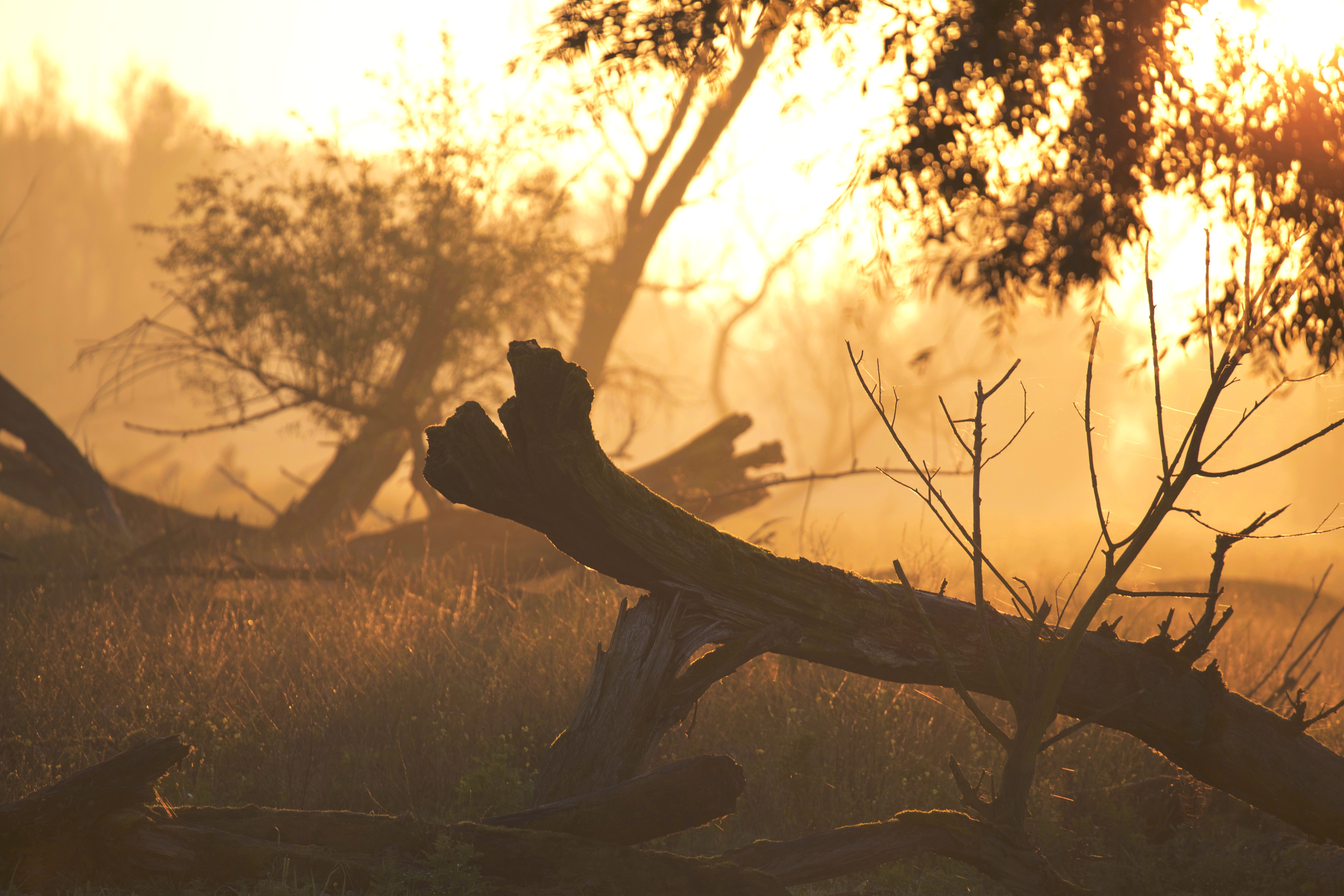 Brown Tree Trunk on Grass during Sunset, Forest, Nature, Sunrise, Sunset, HQ Photo