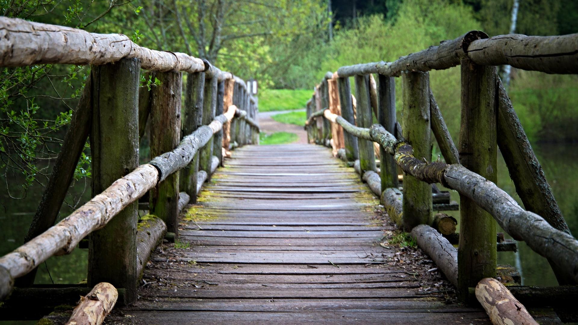Pathway through brown wooden bridge over calm river HD wallpaper ...