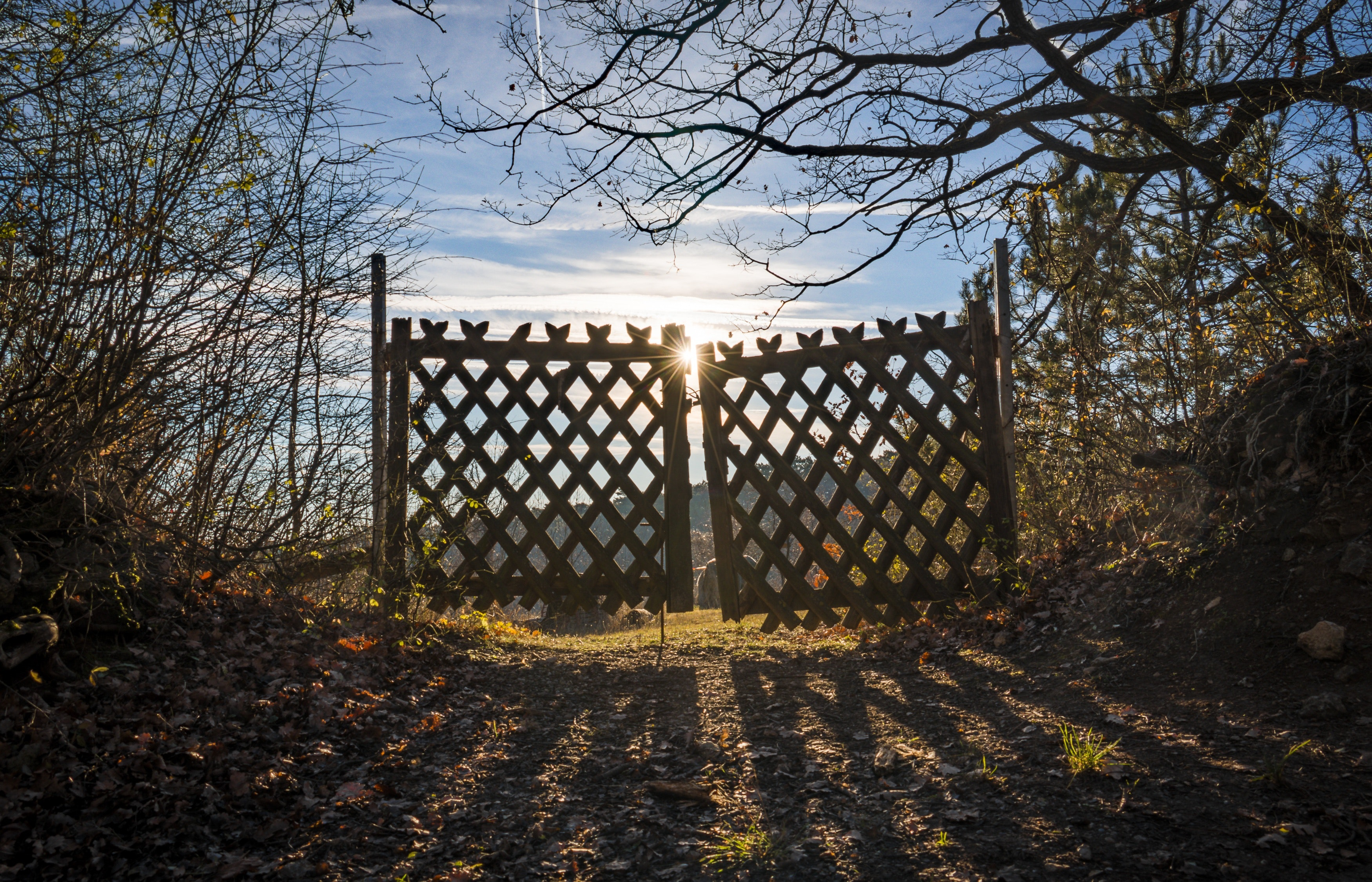 Brown Wooden Door, Clouds, Sun, Wooden gate, Tree trunks, HQ Photo