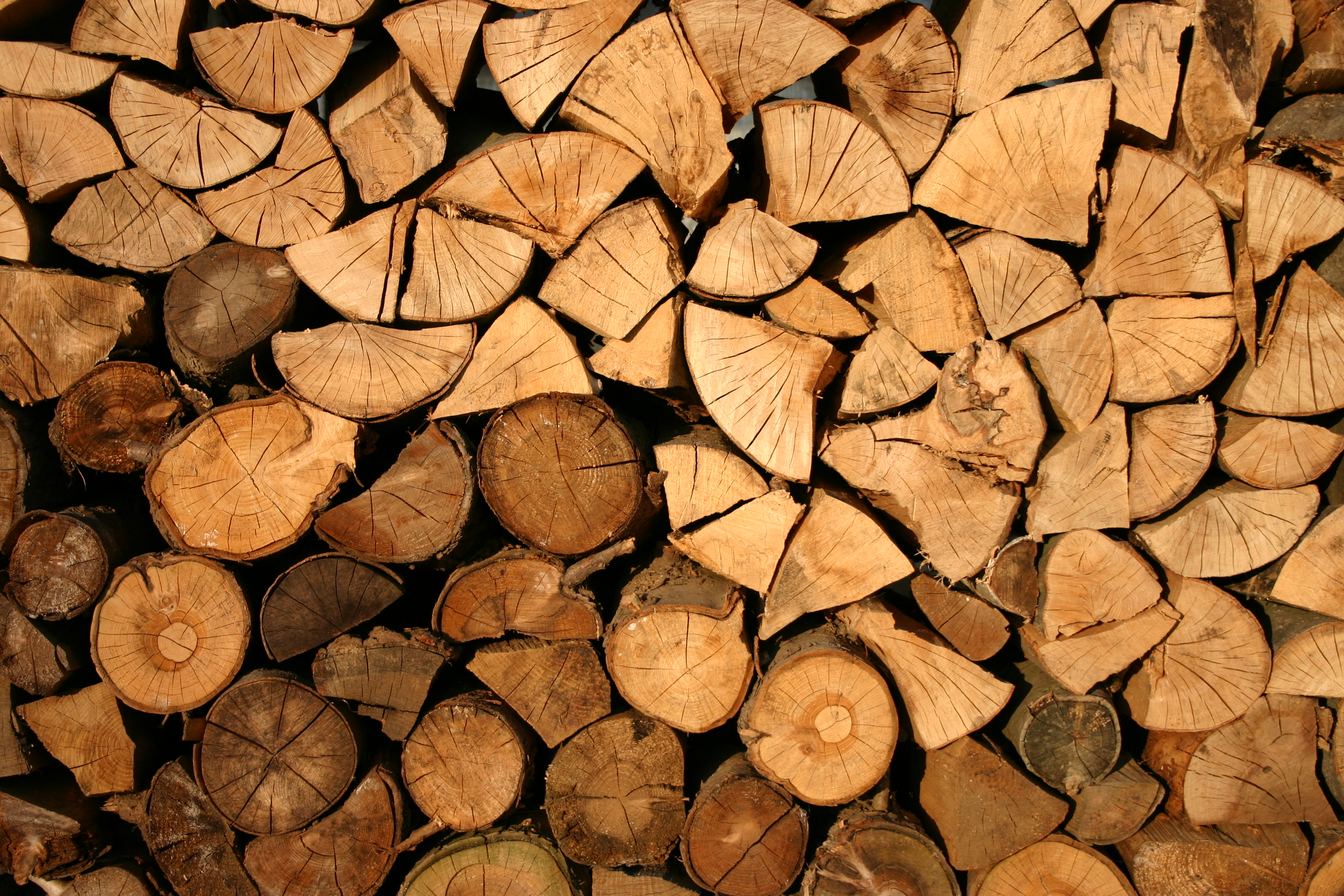 The 7 Firewood Pests To Watch Out For (#6 Is Poisonous) | Pegasus Pest