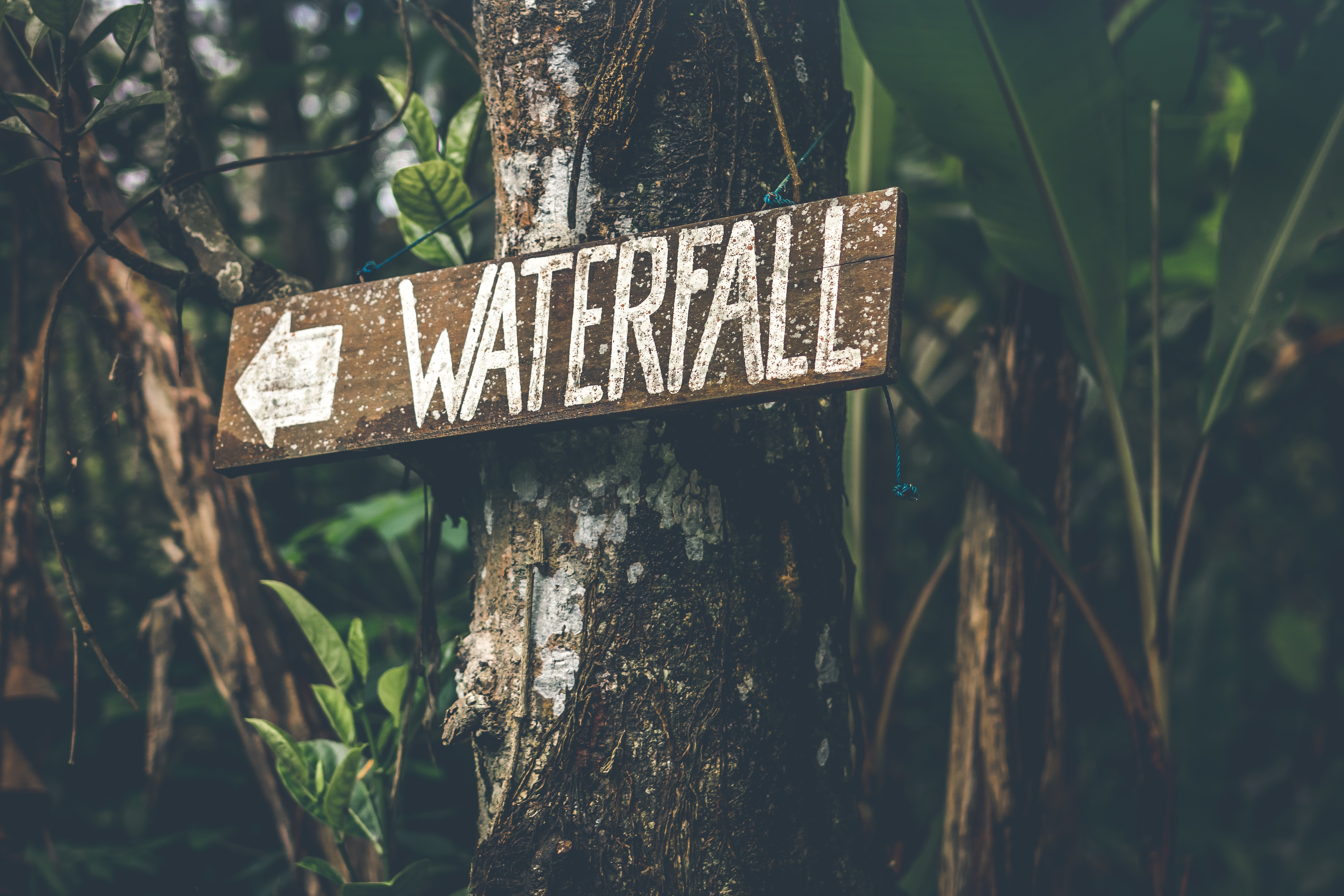 Brown wooden waterfall direction sign placed on brown tree bark photo