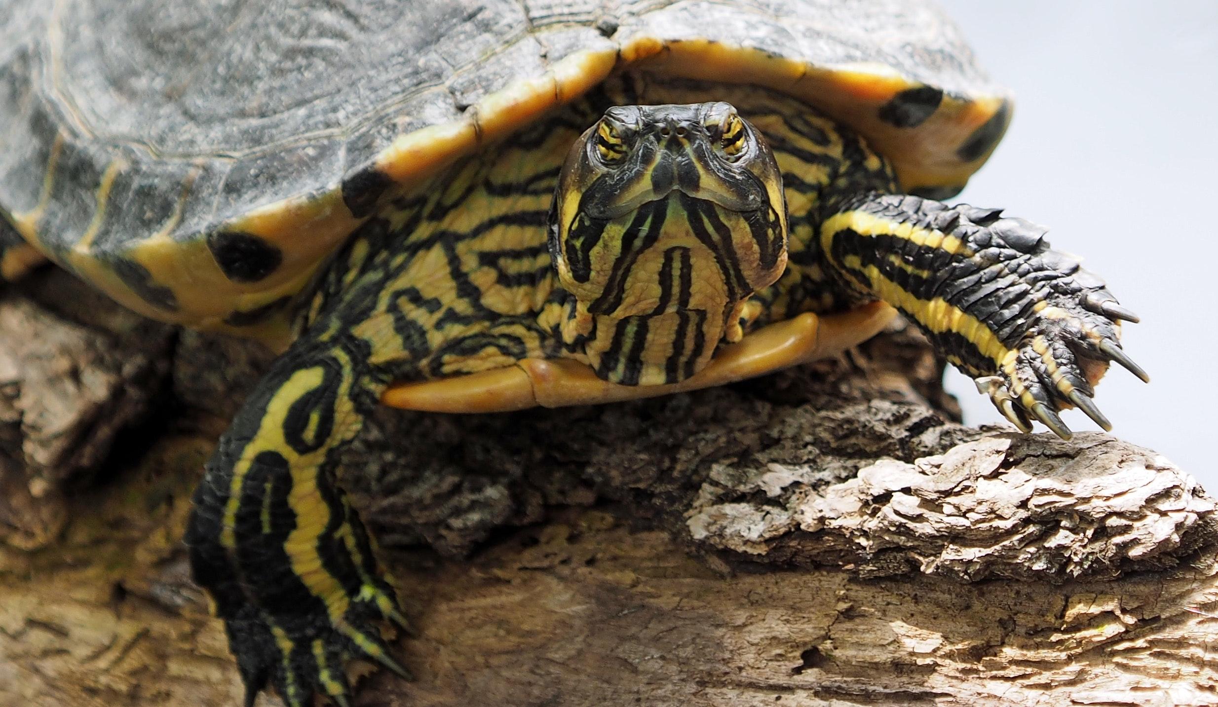 Turtle pet close-up photo